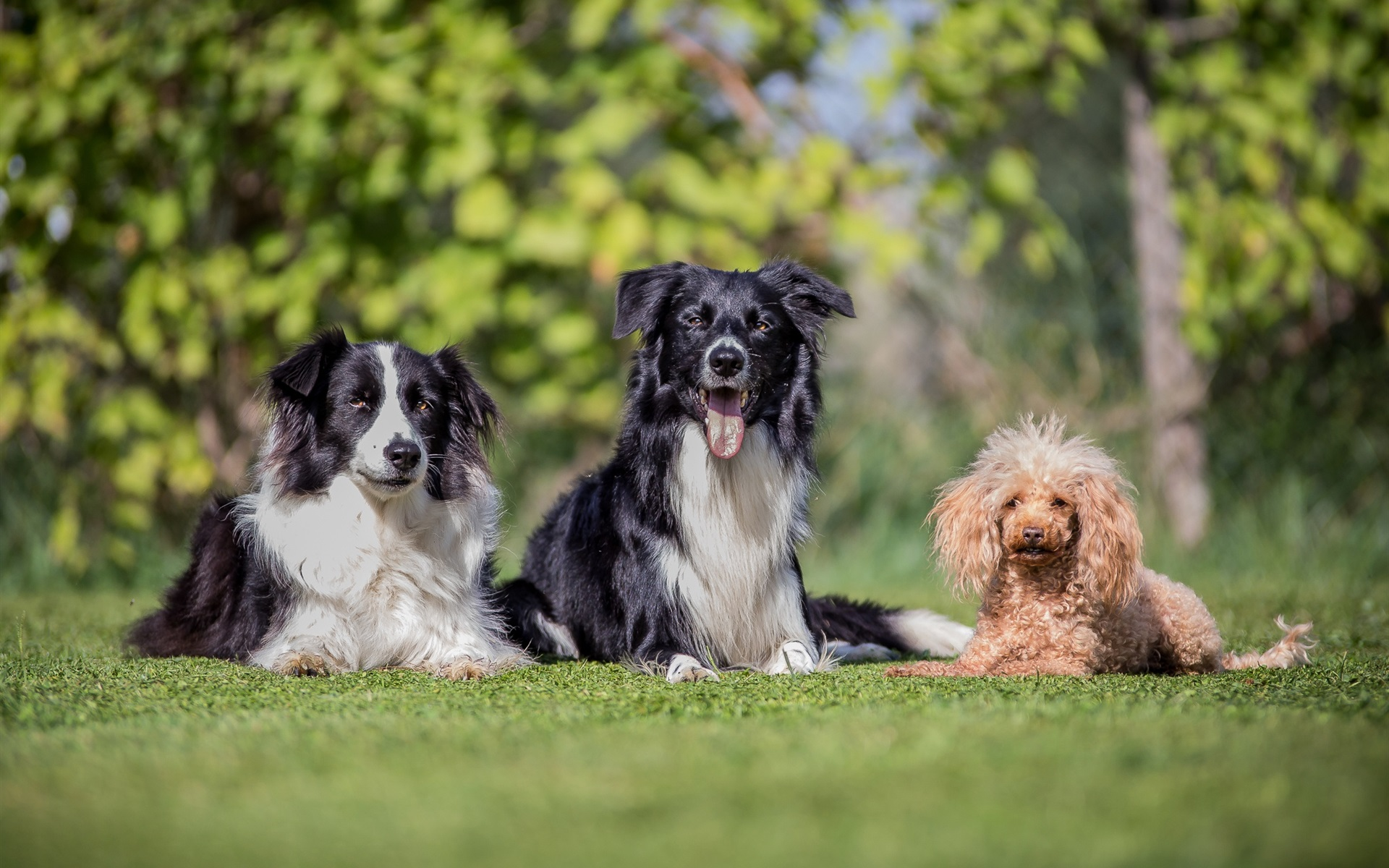 три собаки фото тут