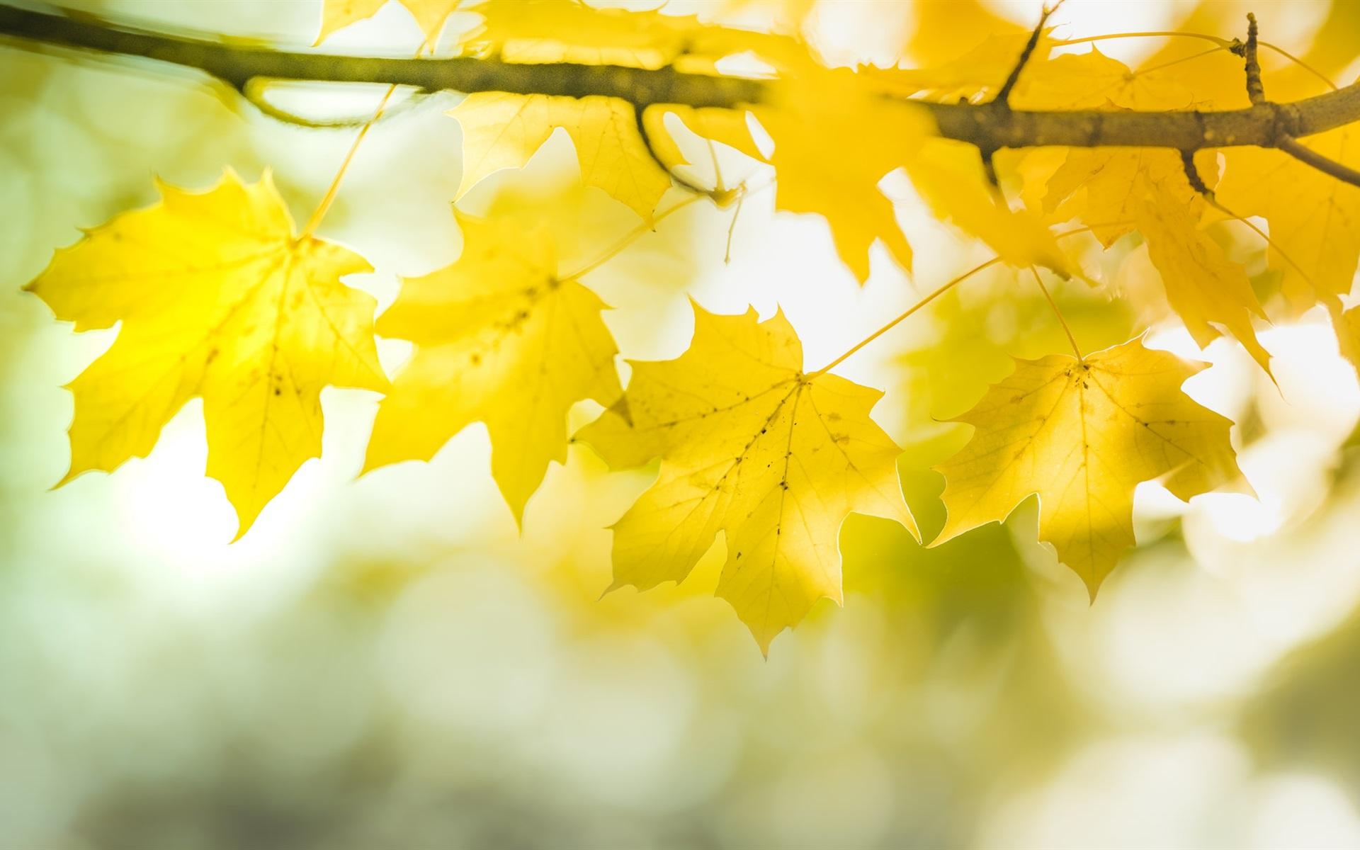 обои желтые листья кремль расположен