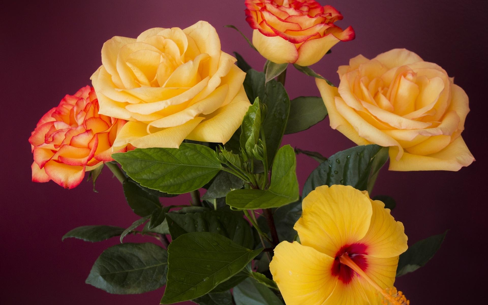 Rosas Y Hibiscos De Color Naranja Fondos De Pantalla