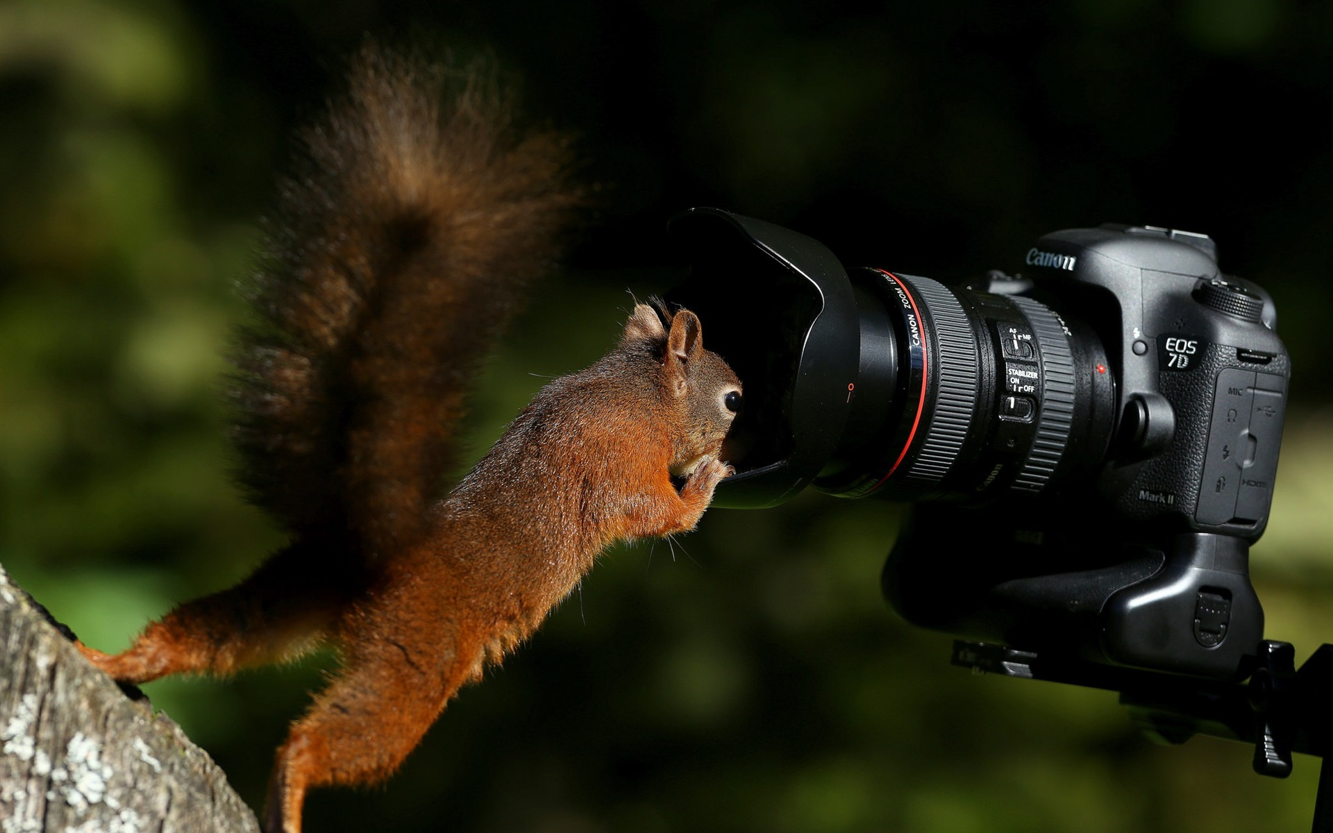 Wallpaper squirrel and eos 7d camera 1920x1200 hd picture - Flower wallpaper 7d ...