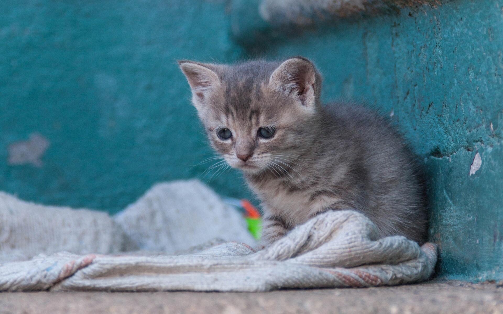 бездомный котенок фото заказ жби изделий