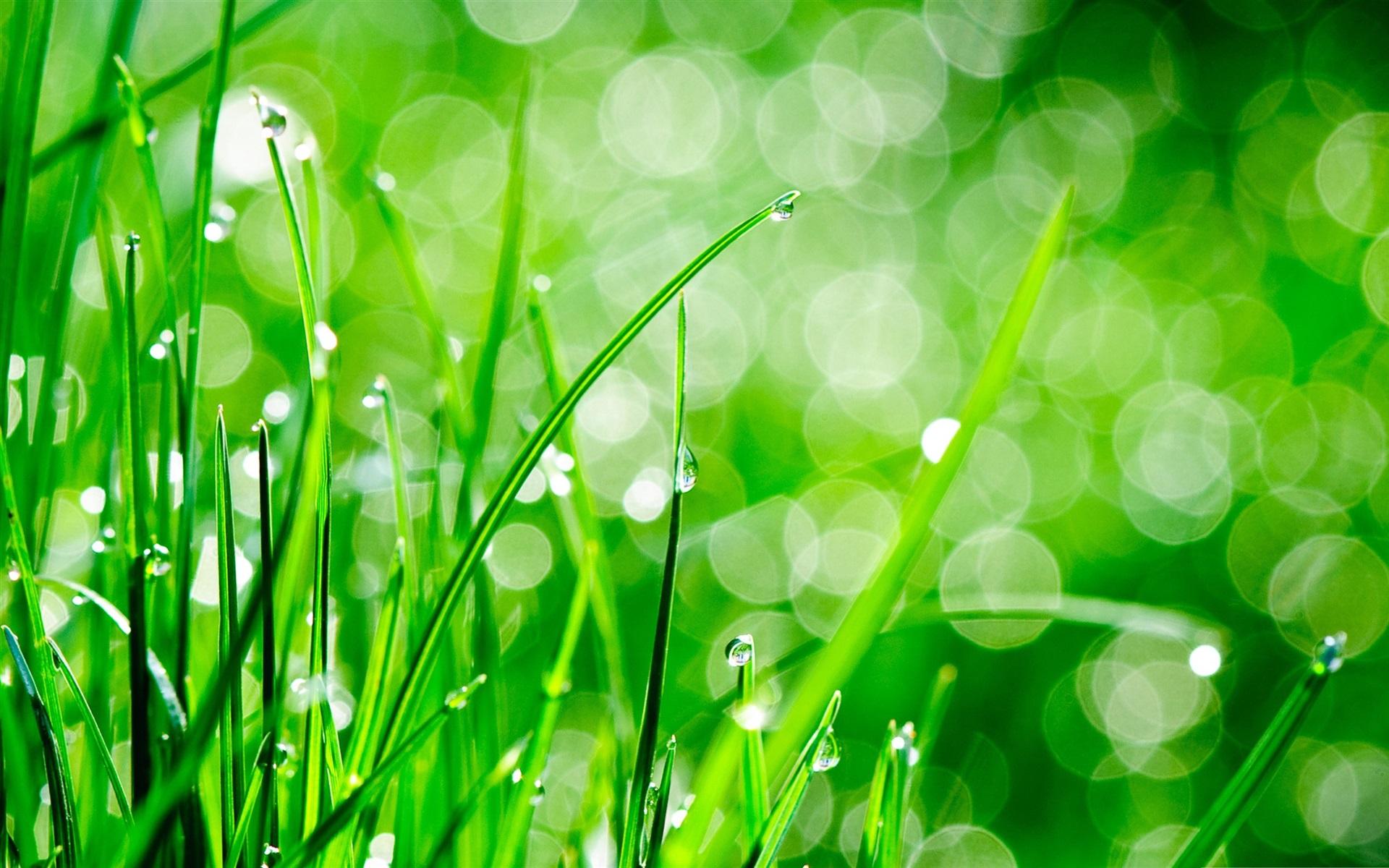 россии картинки в бело зеленых тонах можно найти
