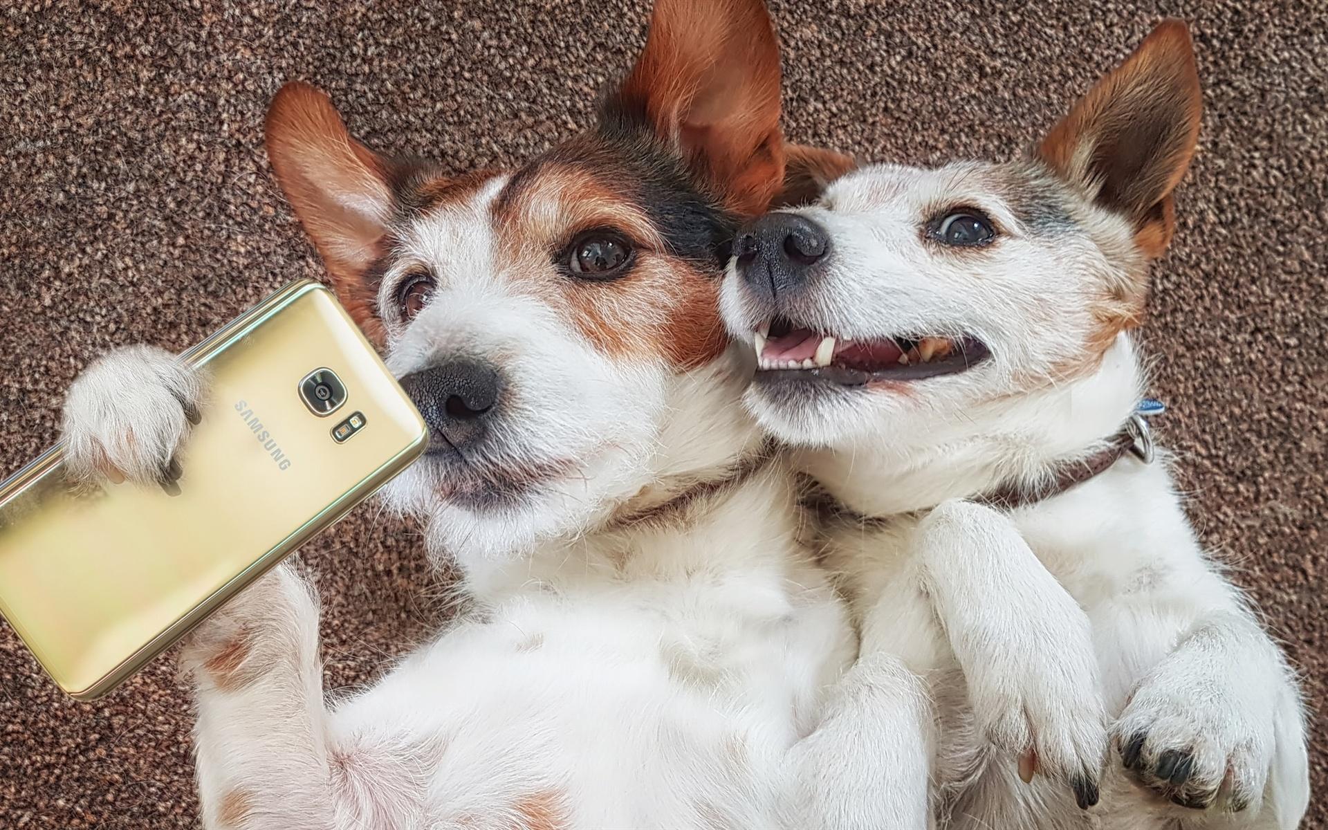 Прикольные картинки с животными-собаки