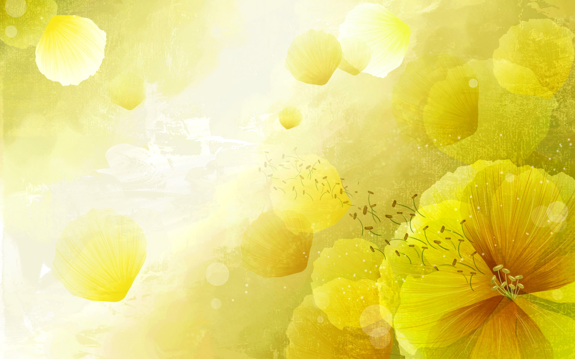 Wallpaper Yellow Flowers Background Postcard 1920x1200 Hd Picture