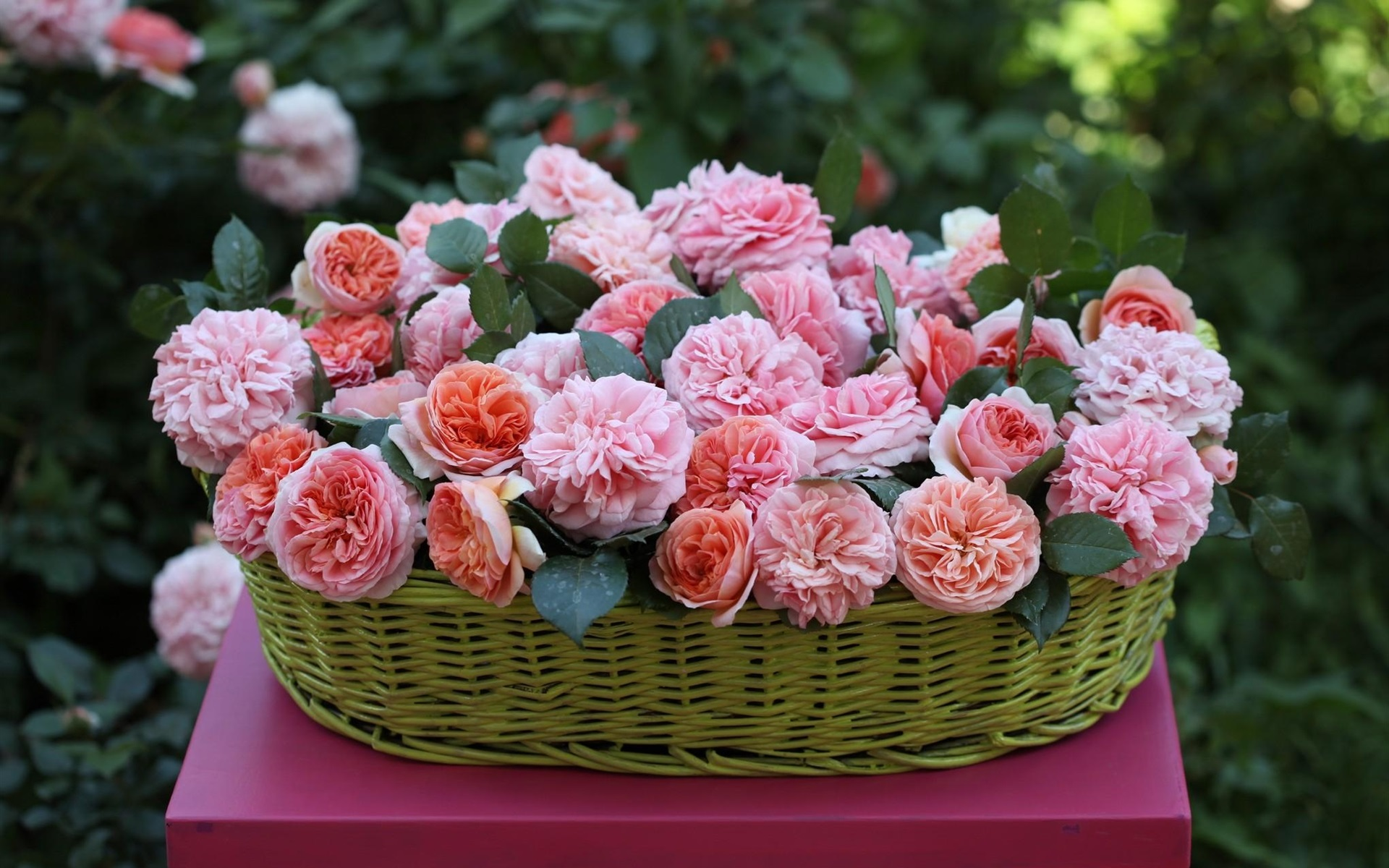 wallpaper basket, beautiful pink rose flowers 1920x1200 hd picture