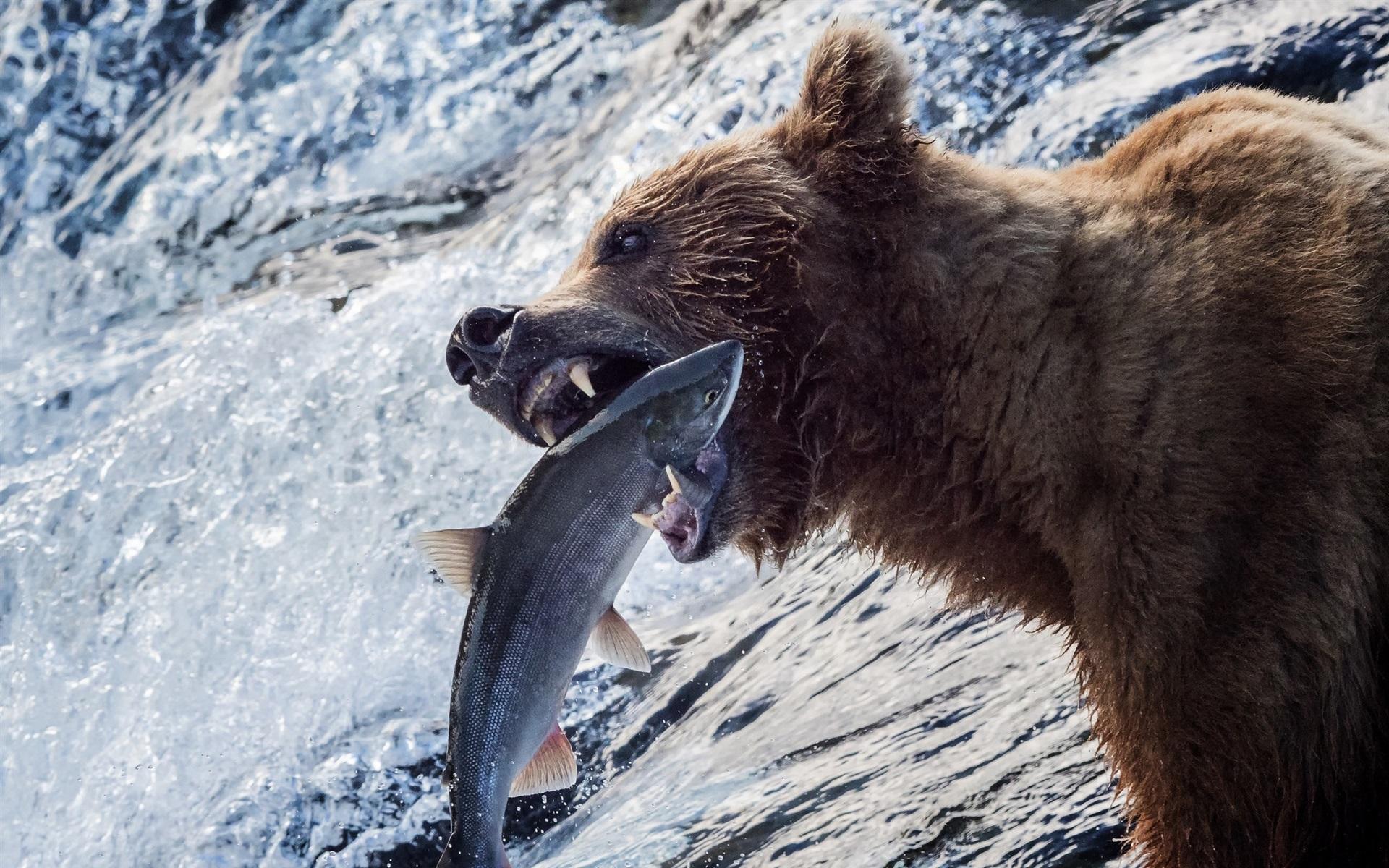 Фото медведя при ловле рыбы