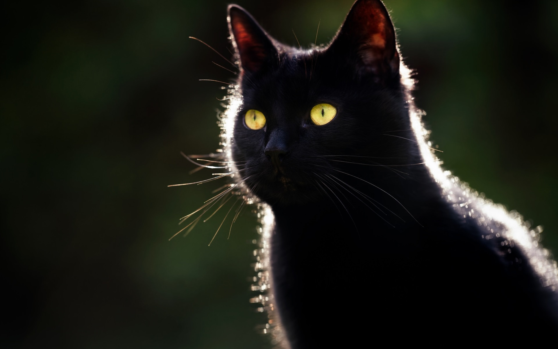 Wallpaper Black Cat Yellow Eyes Backlight Dark Background
