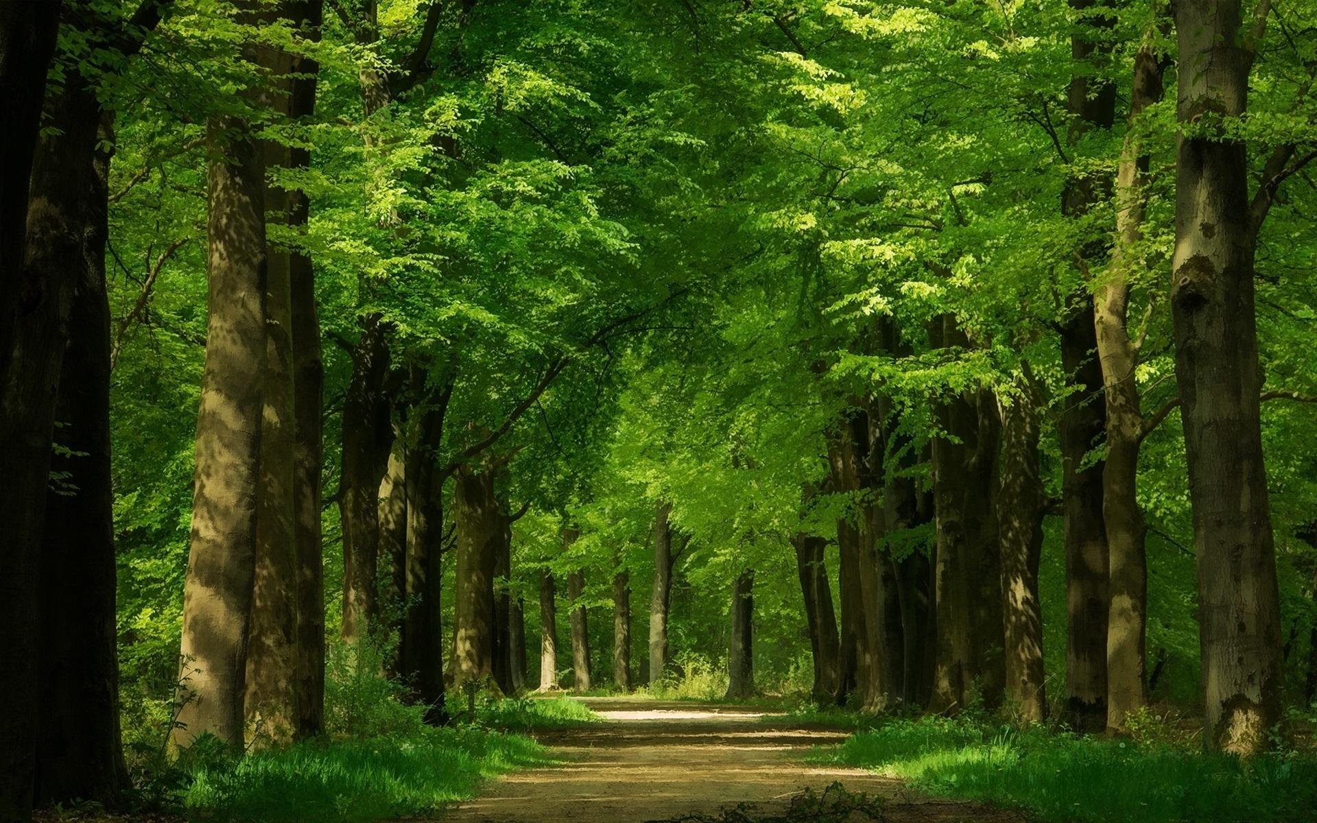 Verde Full Hd Fondo De Pantalla And Fondo De Escritorio: Fondos De Pantalla Bosque Verde, árboles, Camino
