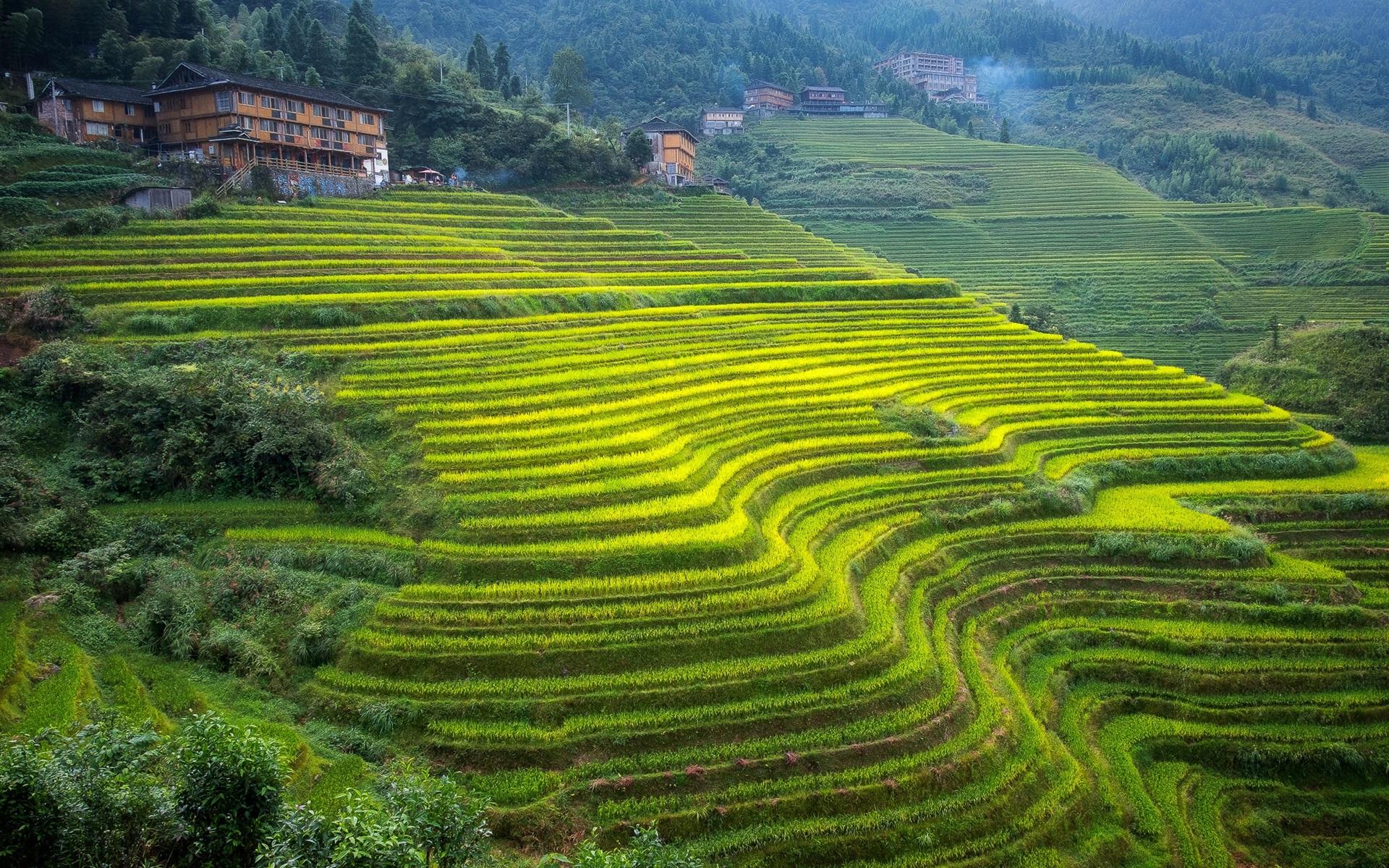 hermosas fotos de casa hd Fondos De Pantalla Guangxi Hermosas Terrazas Verde