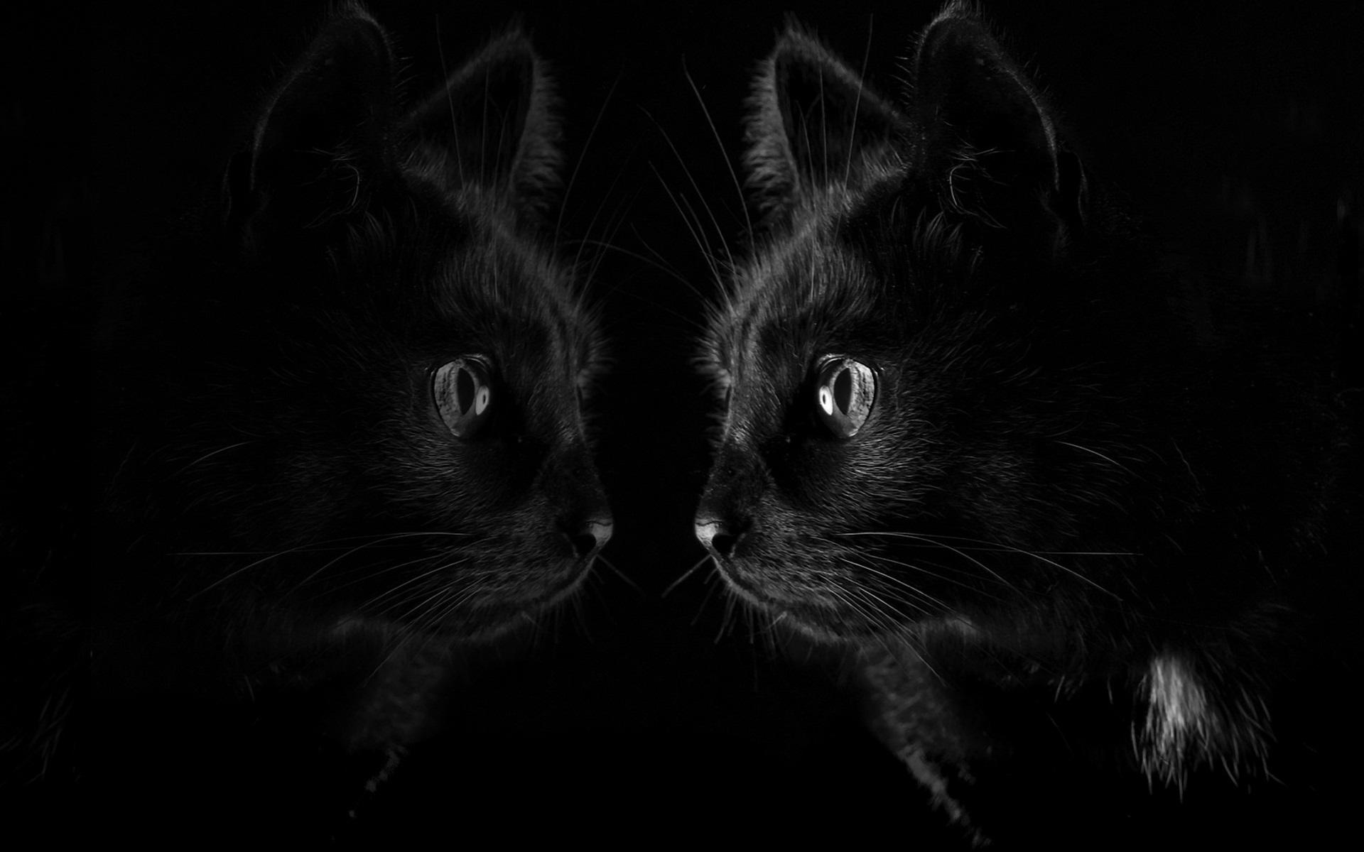 Fonds d'écran Chat noir regarder miroir, fond noir 1920x1200 HD image