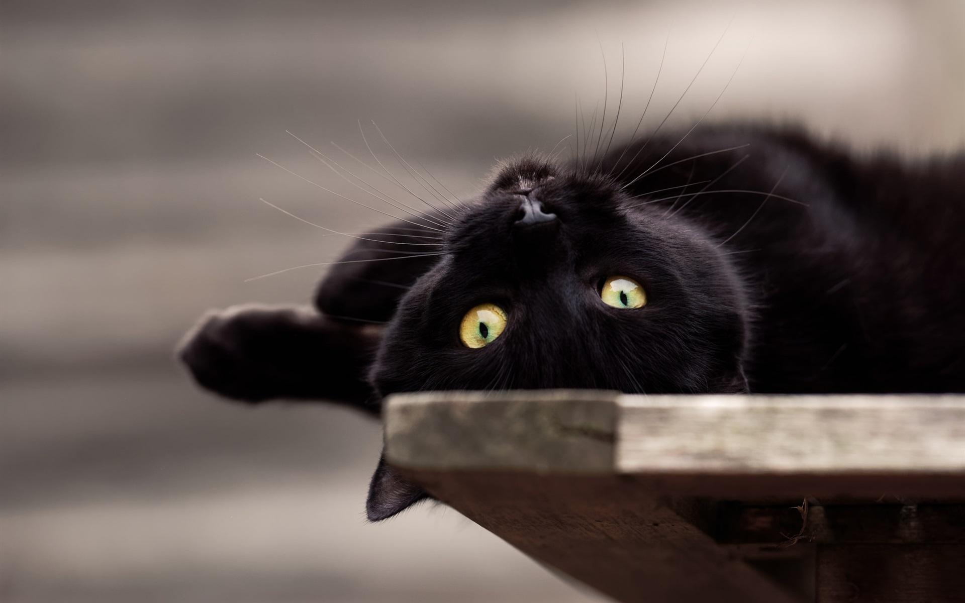 цены черные кошки картинки на обоях серию картинок для