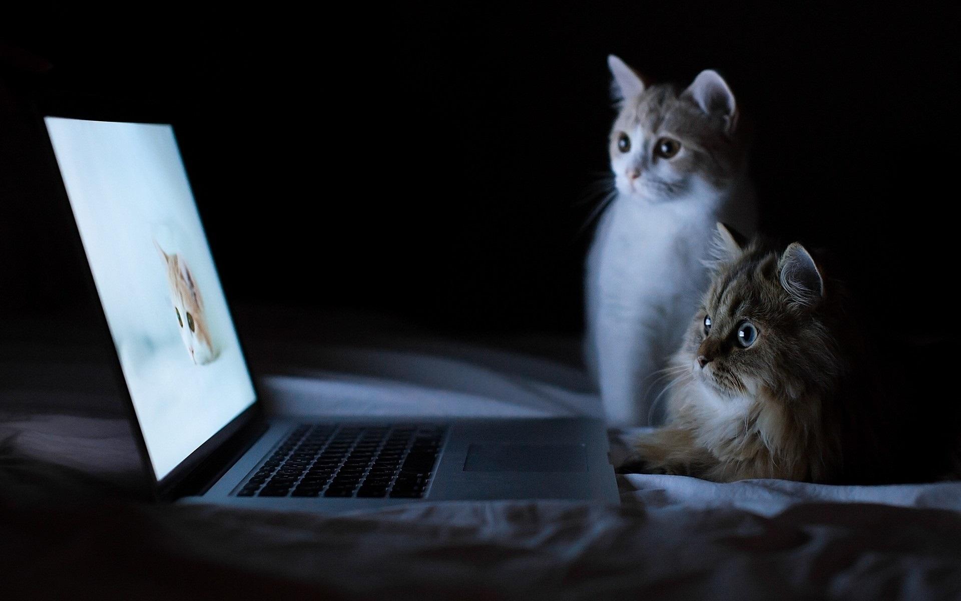 hintergrundbilder laptop