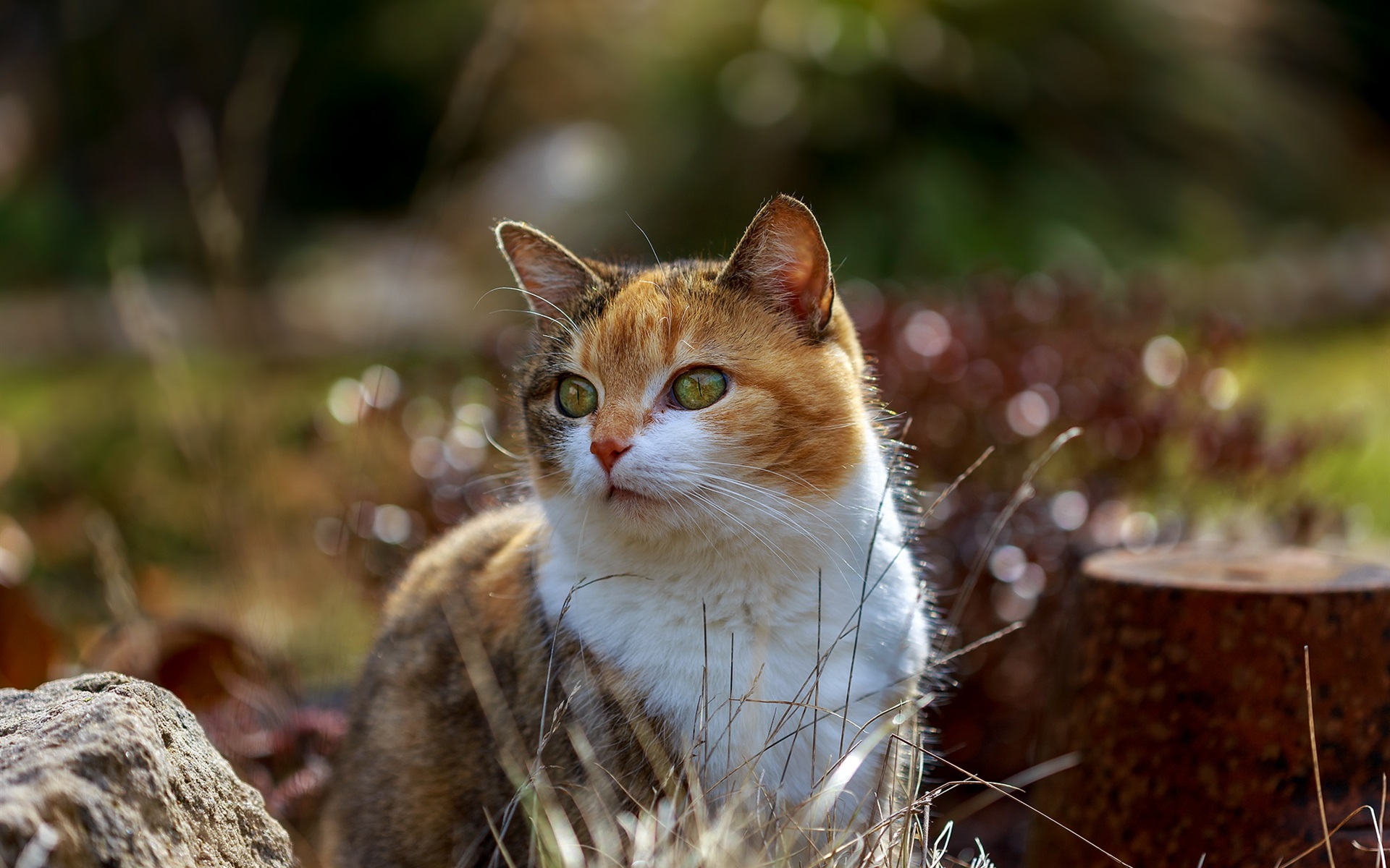 壁紙 かわいい猫 夏 1920x1200 Hd 無料のデスクトップの背景 画像