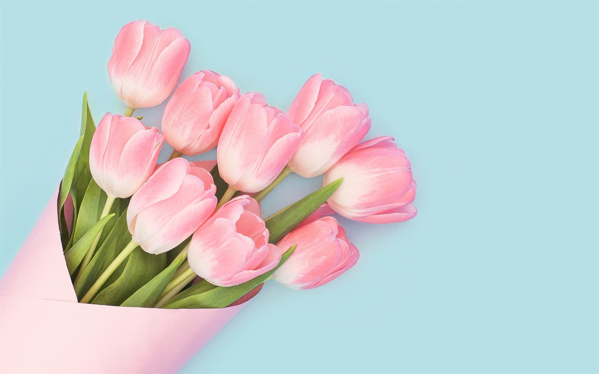 Wallpaper Pink Tulips Bouquet Blue Background 1920x1200 Hd Picture Image