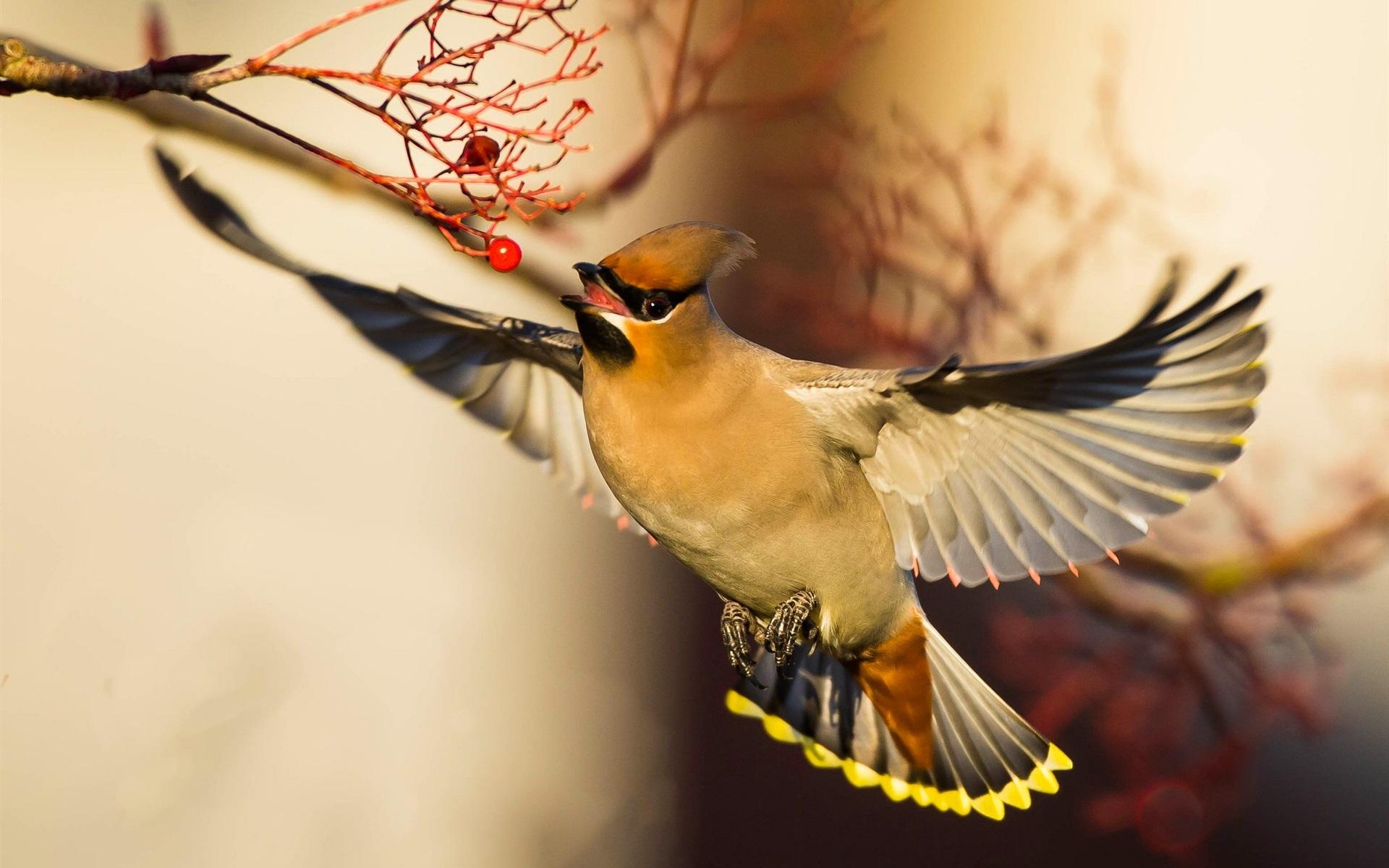 птички в полете картинки это