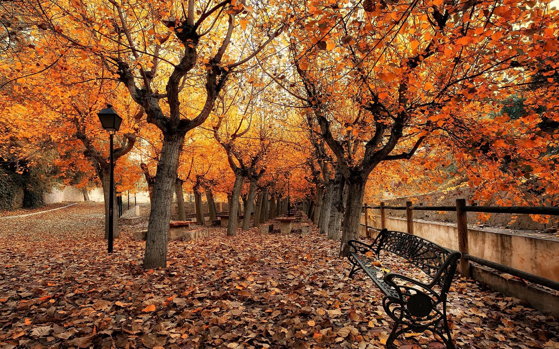 herbst park bäume blätter bank 1920x1200 hd