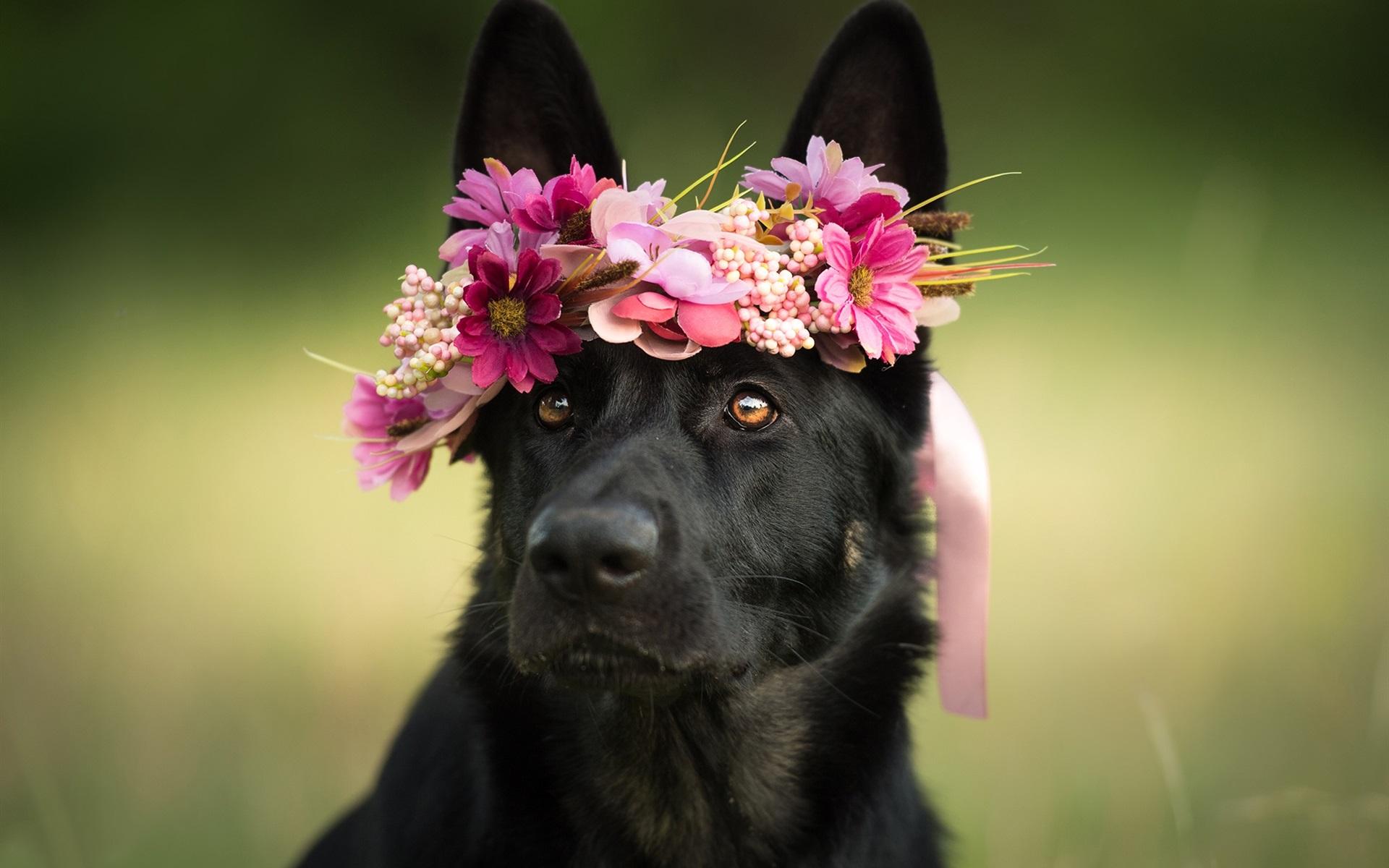 Картинки животных с цветами в зубах фото, радугой картинка для