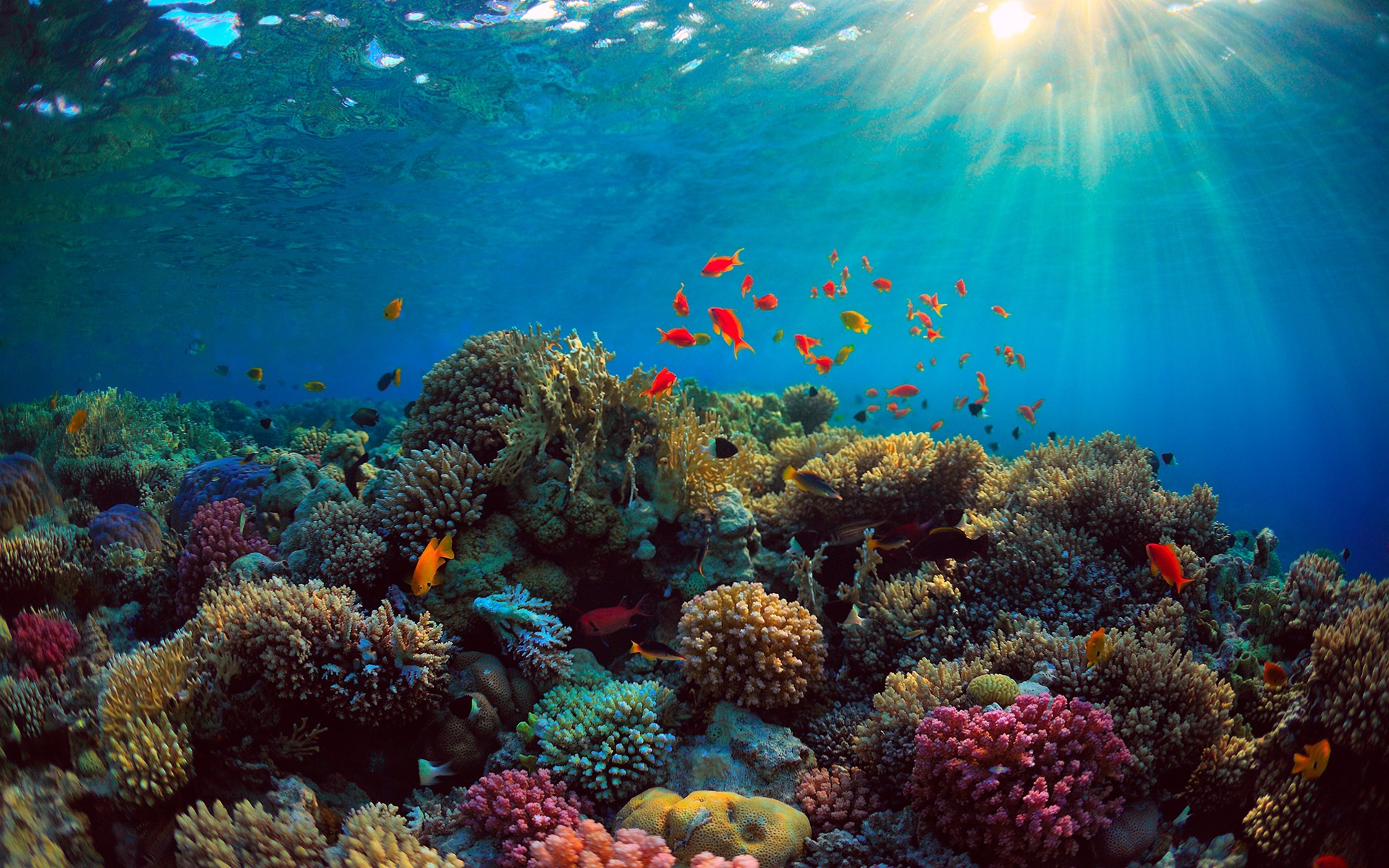 Fonds d 39 cran mer coraux poissons sous marins 2560x1600 hd image - Sea coral wallpaper ...