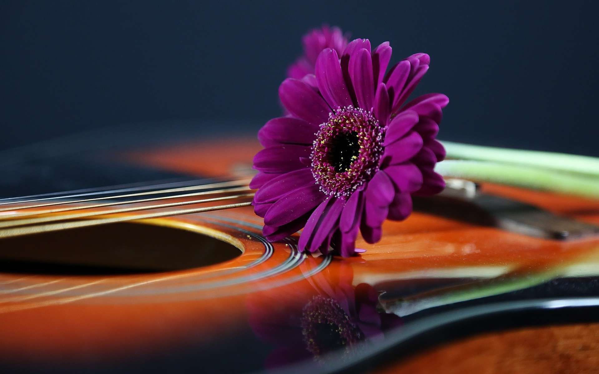 壁紙 紫のデイジー ギター 1920x1200 Hd 無料のデスクトップの背景 画像