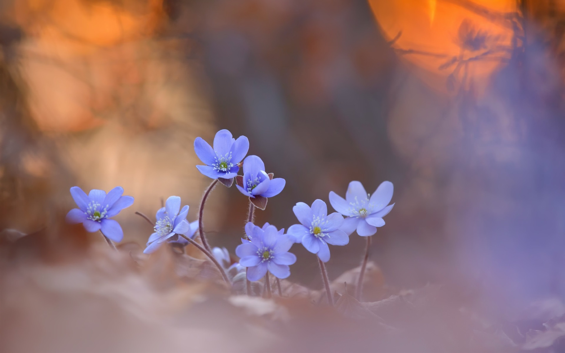 Обои размытый фон, цветок. Цветы foto 13