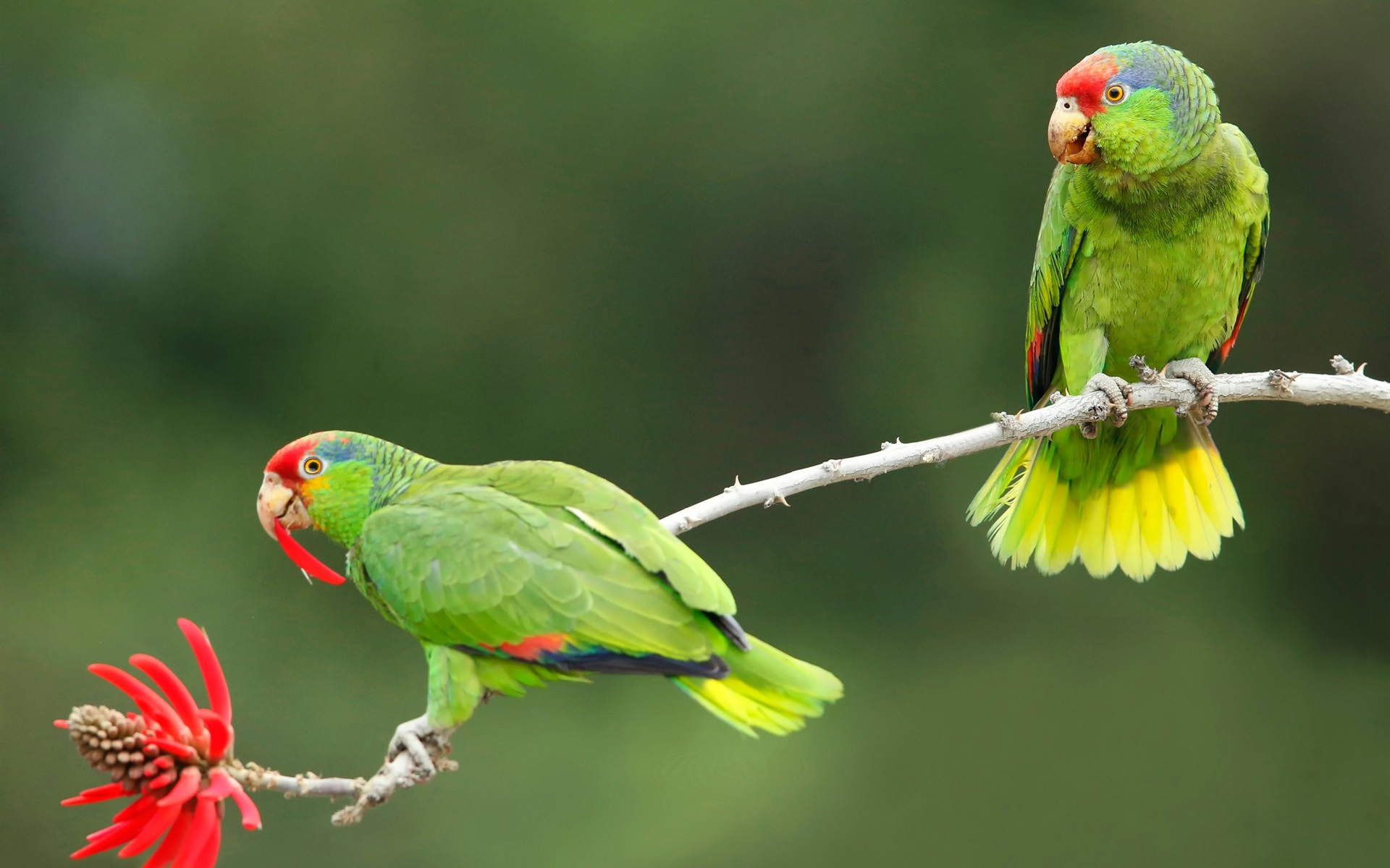 Букет зеленый попугай, для поздравления мужчине