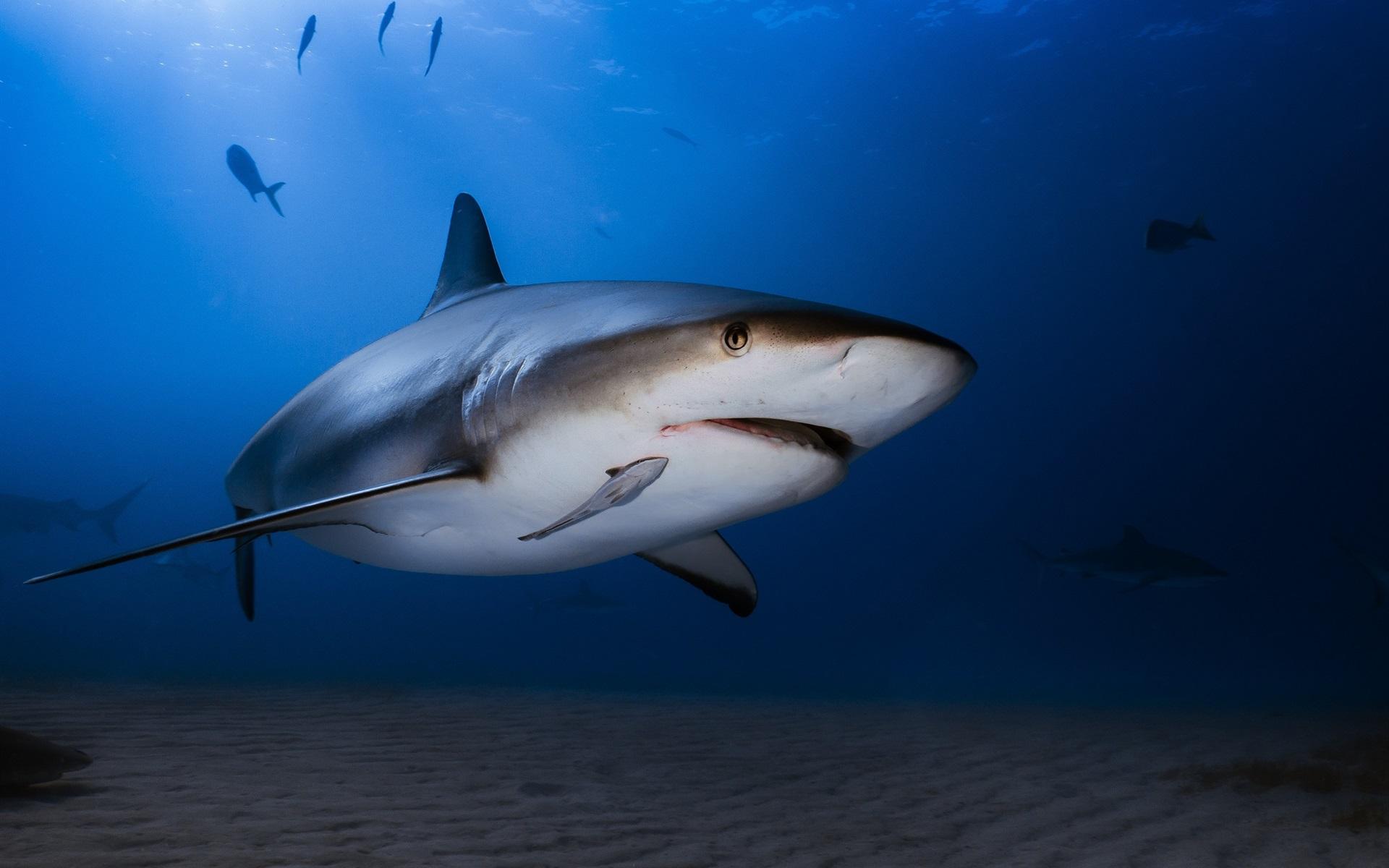 壁紙 水中 海 サメ 1920x1200 Hd 無料のデスクトップの背景 画像