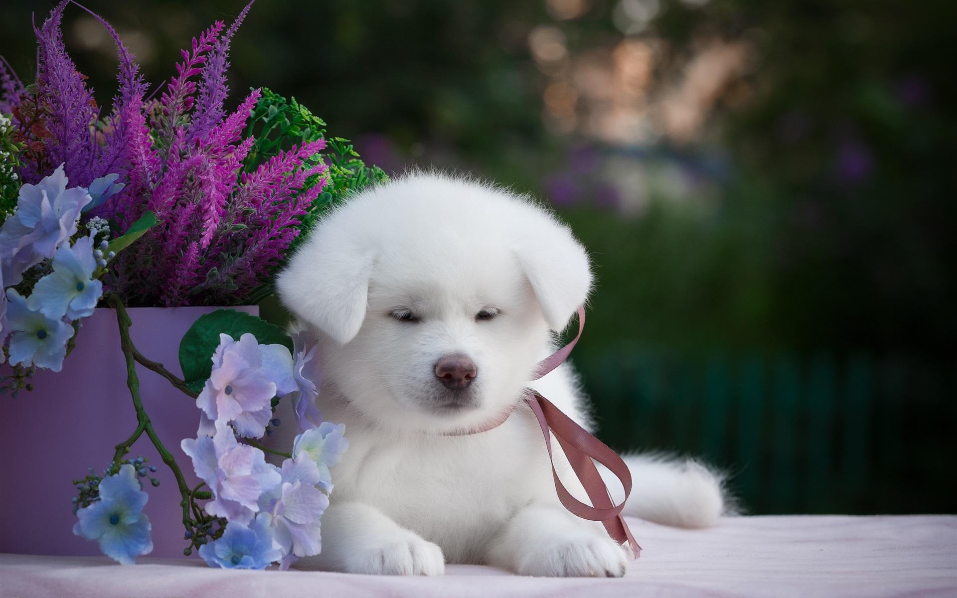 щенок и цветы картинки они все разные