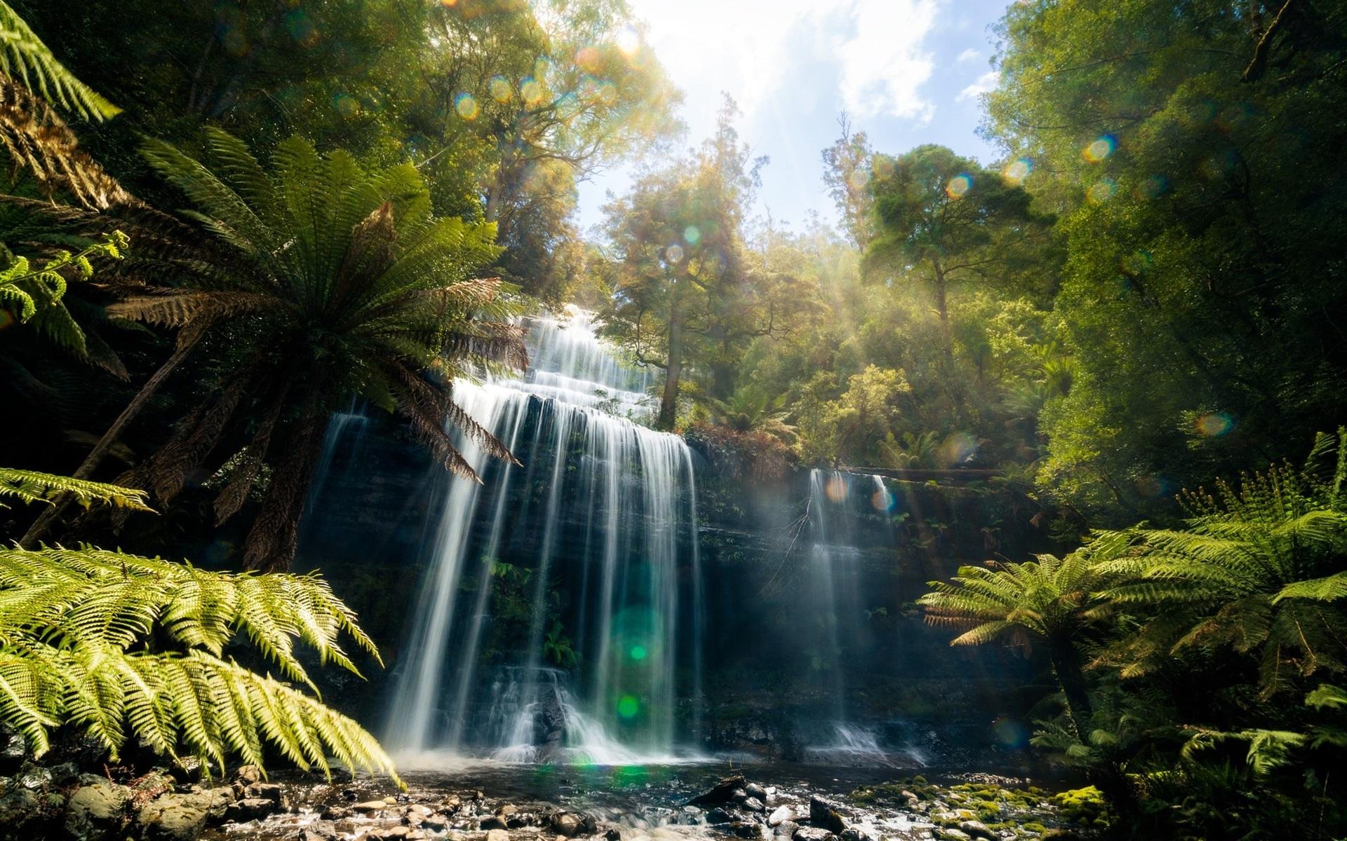 Jungle Waterfall Wallpaper Hd: Wallpaper Tasmania, Beautiful Waterfall, Jungle 1920x1200