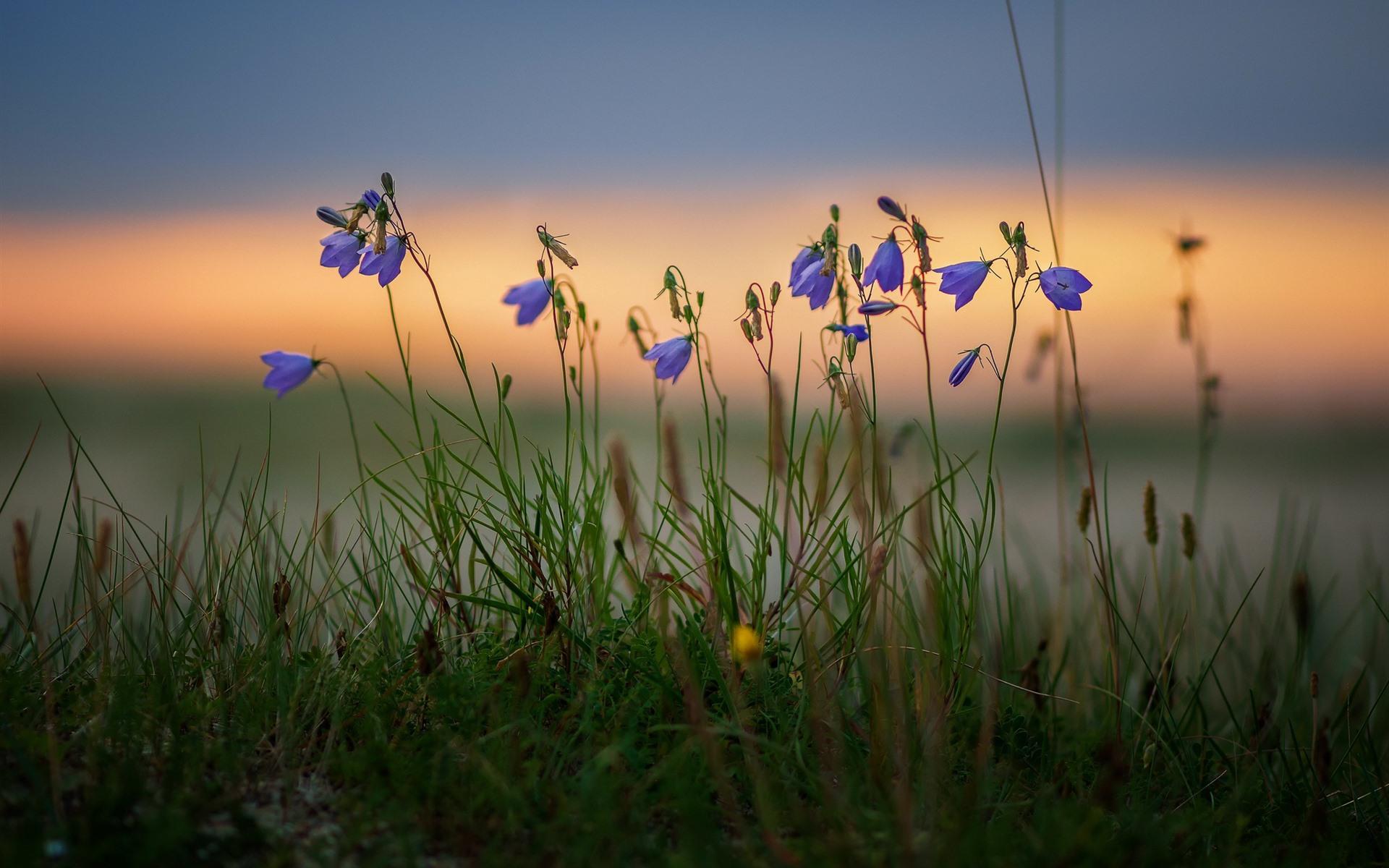 Blue Flowers Grass Bokeh 750x1334 Iphone 8 7 6 6s