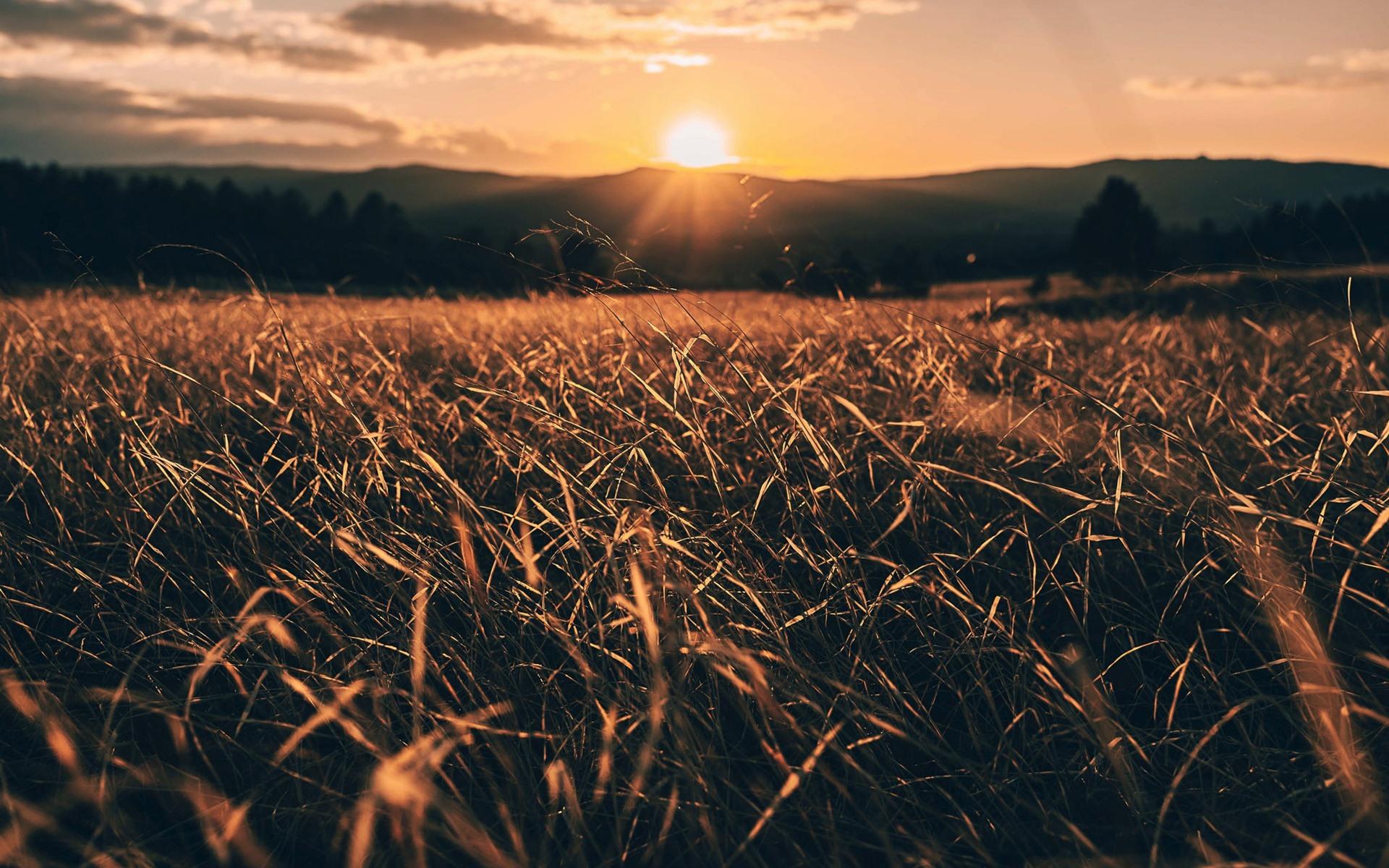 картинки с рассветом и травой