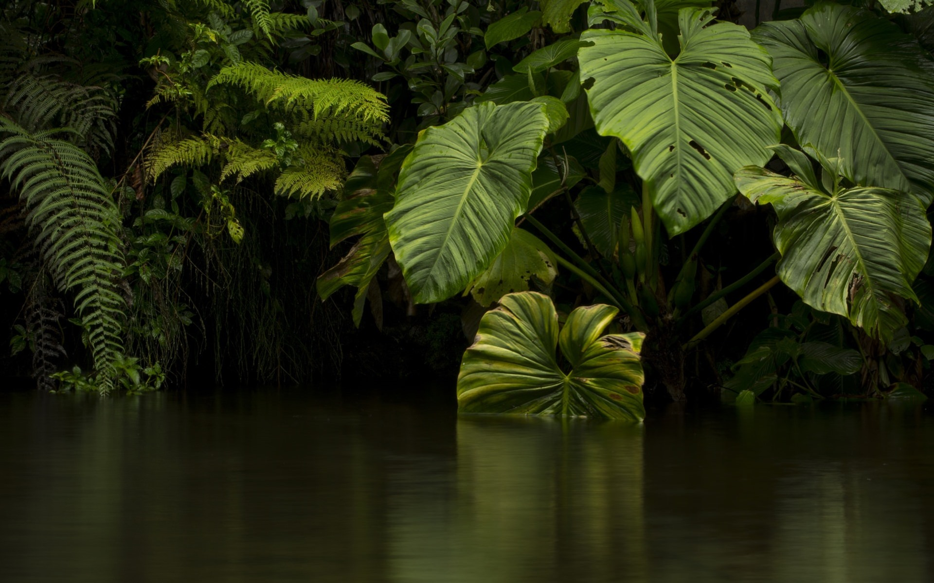 Fondo De Pantalla Selva: Fondos De Pantalla Selva, Hojas Verdes, Río, Agua