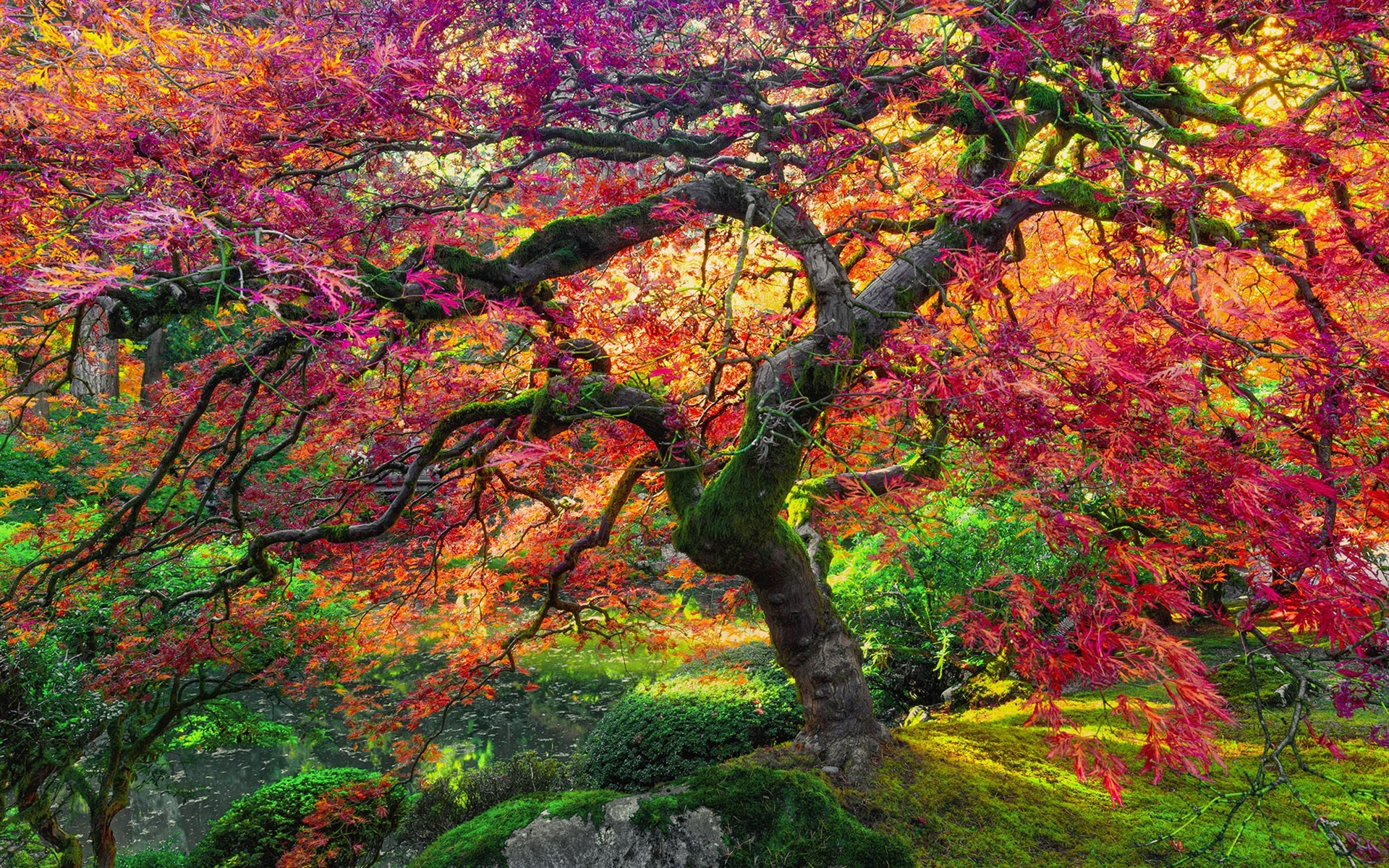 Wallpaper Maple Tree Red Leaves Autumn 1920x1200 Hd