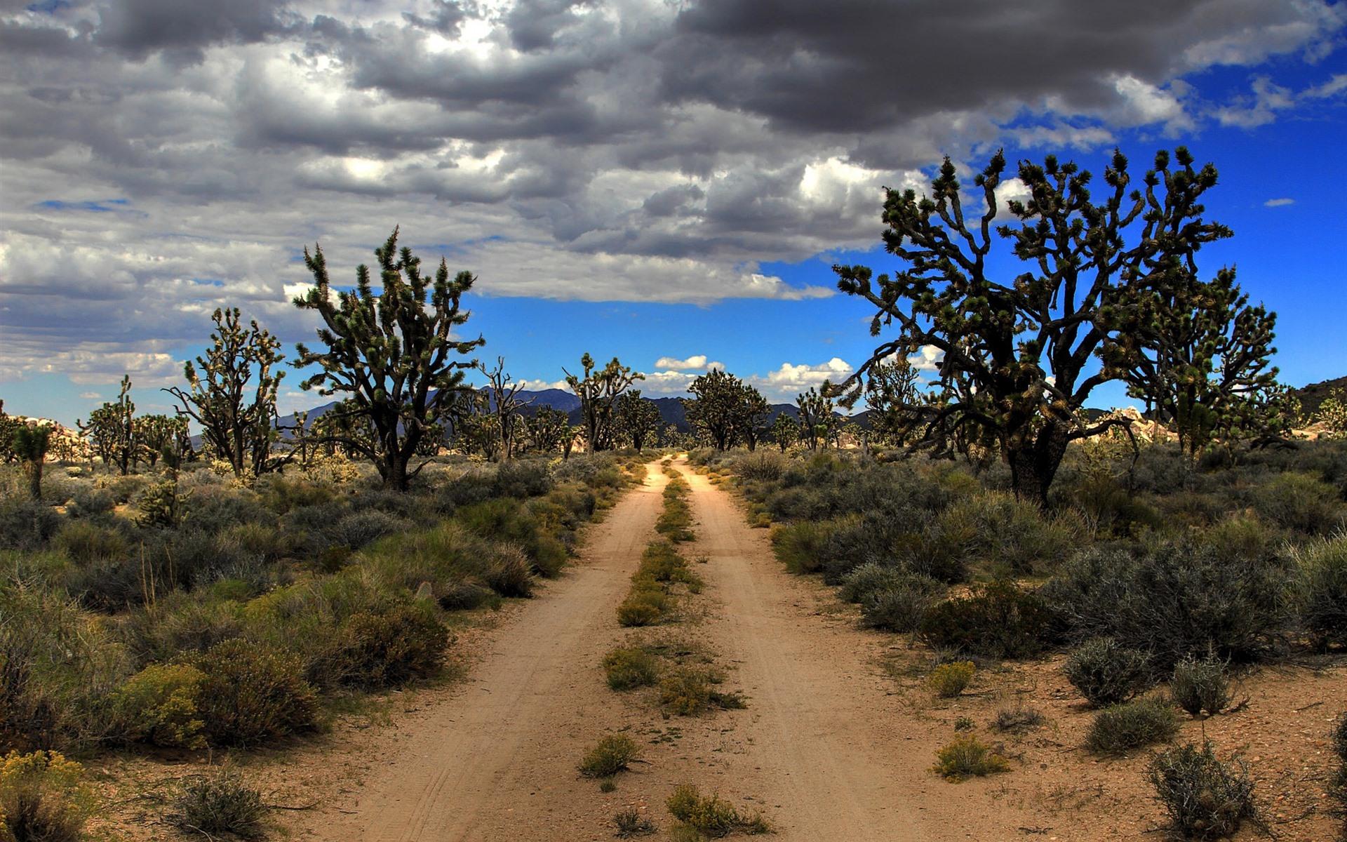 Wallpaper usa mojave joshua tree national park desert 1920x1200 hd picture image - Joshua tree wallpaper ...