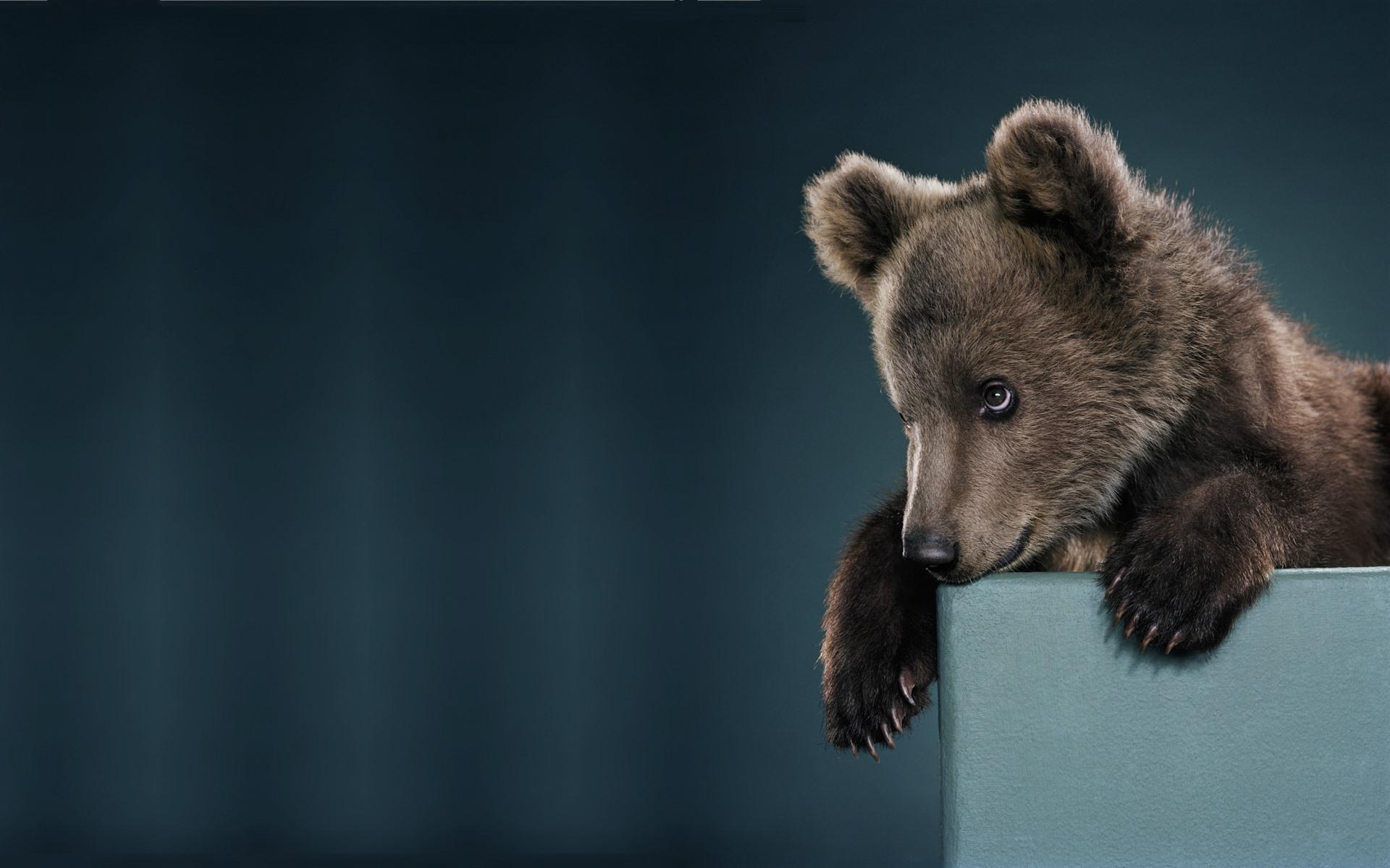владимировна картинка бурый медведь в костюме белого этой