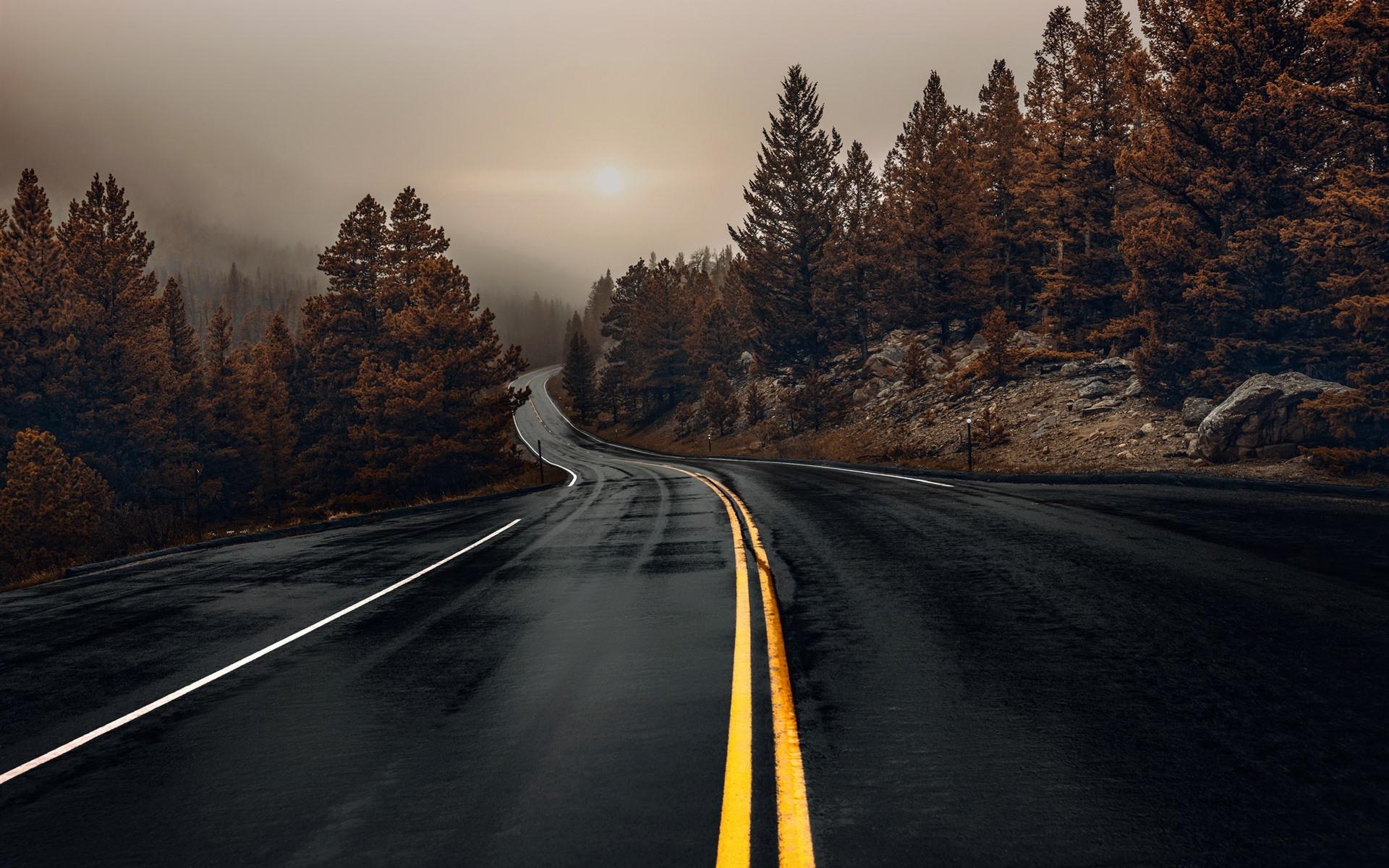 Wallpaper Wet Road Trees Fog Morning Autumn 1920x1200 Hd