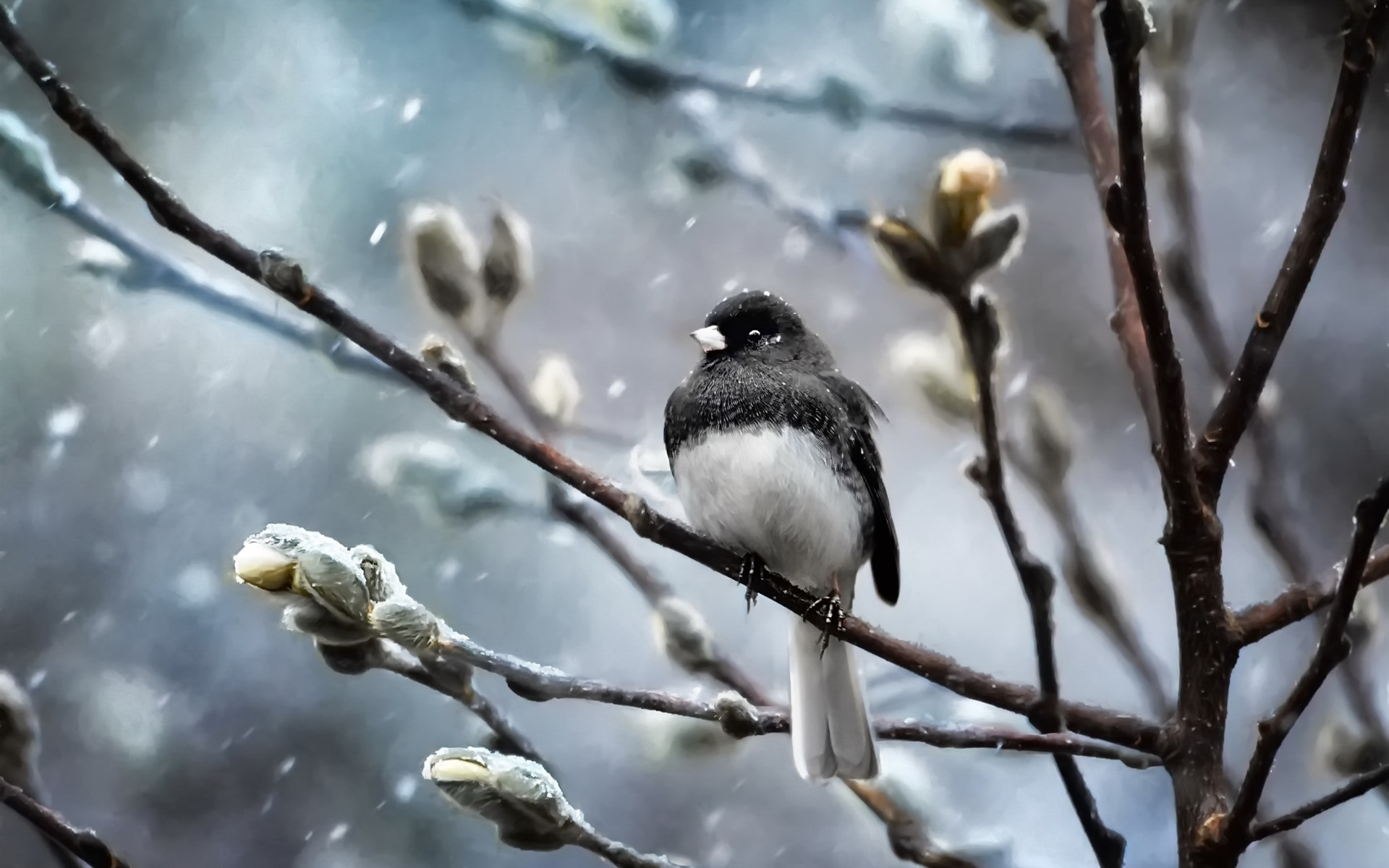 Wallpaper Bird, Trees, Twigs, Snow, Winter 1920x1200 HD