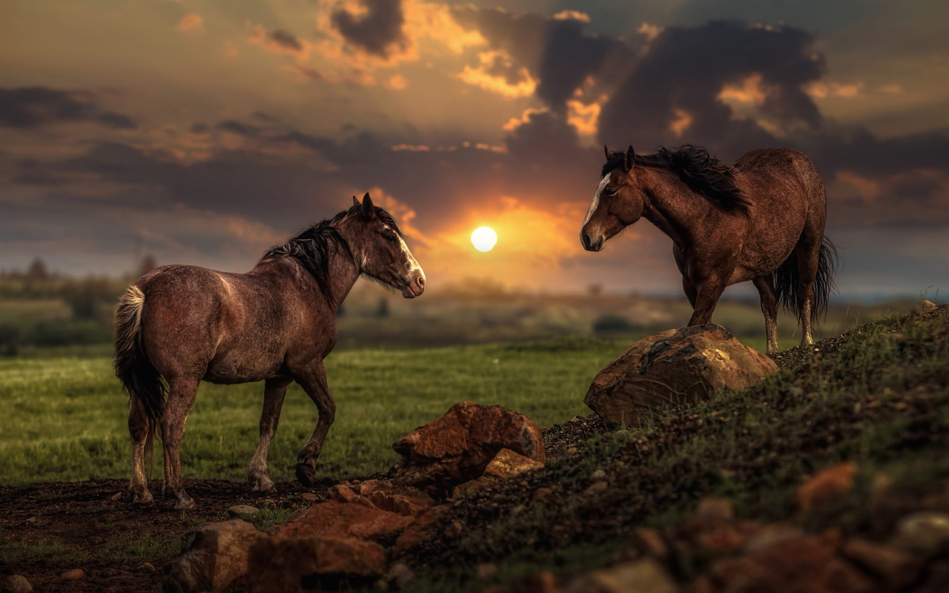 wallpaper two horses sunset 1920x1200 hd picture image