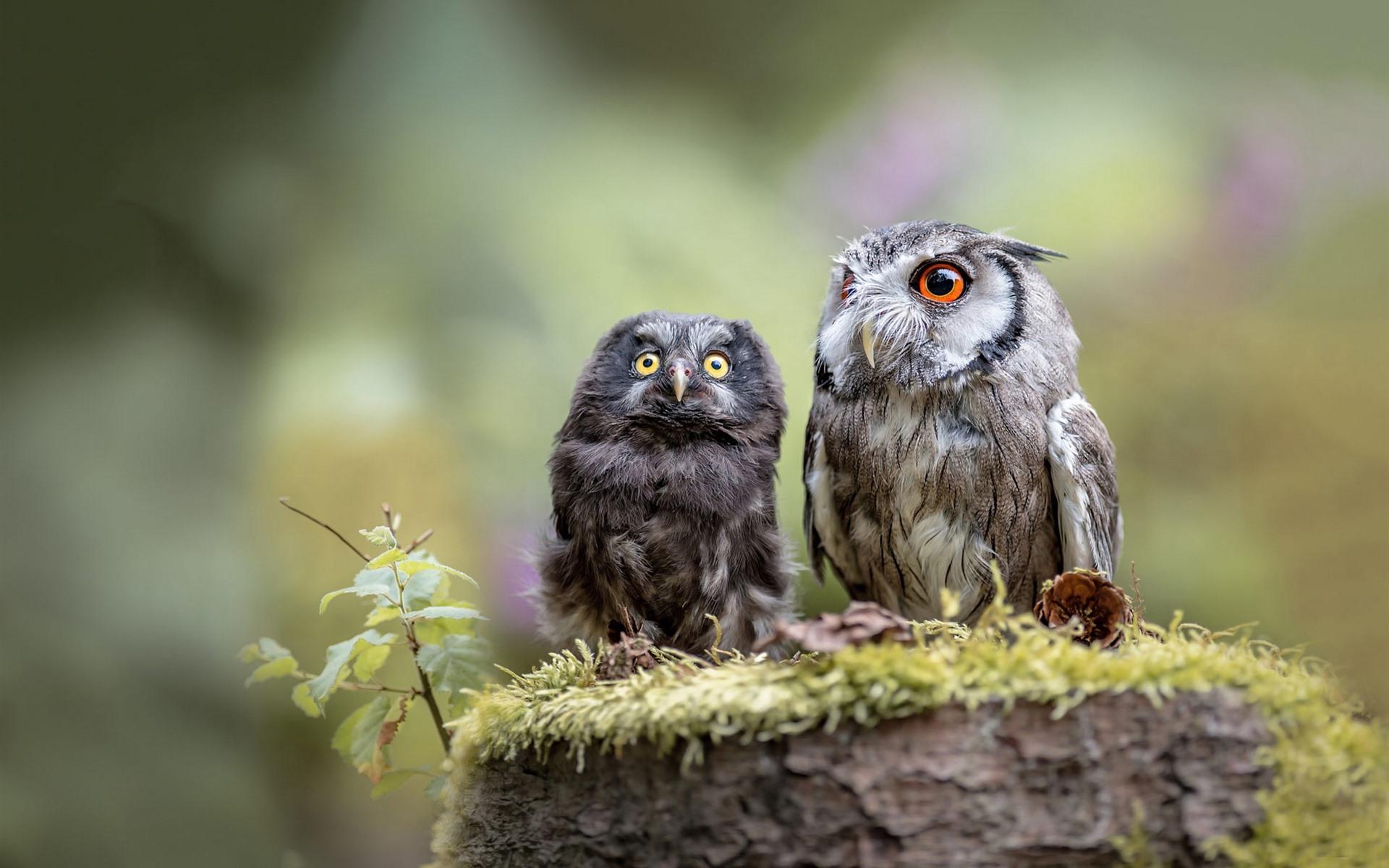 результате картинки две совы поселился
