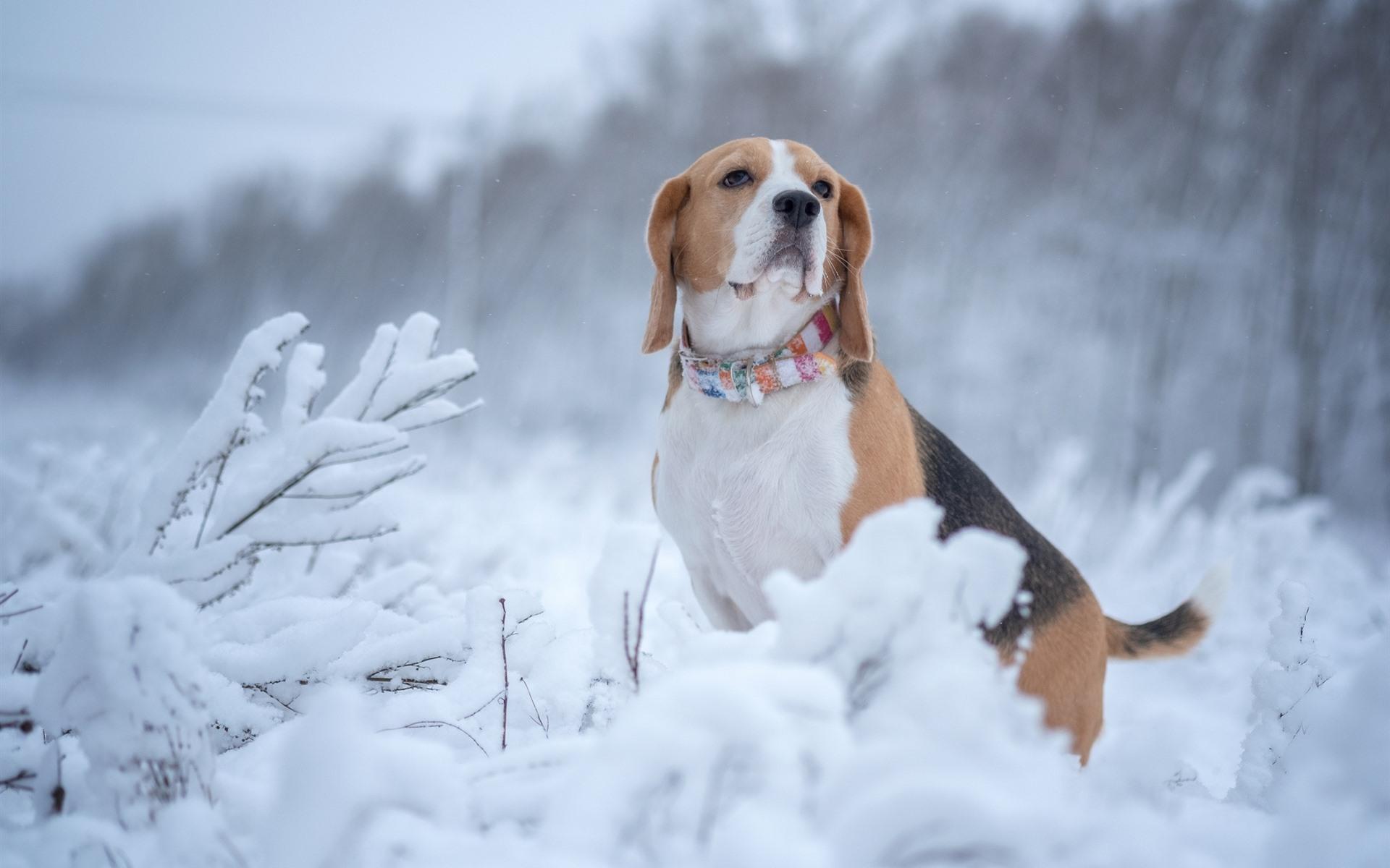 зимние собаки фото