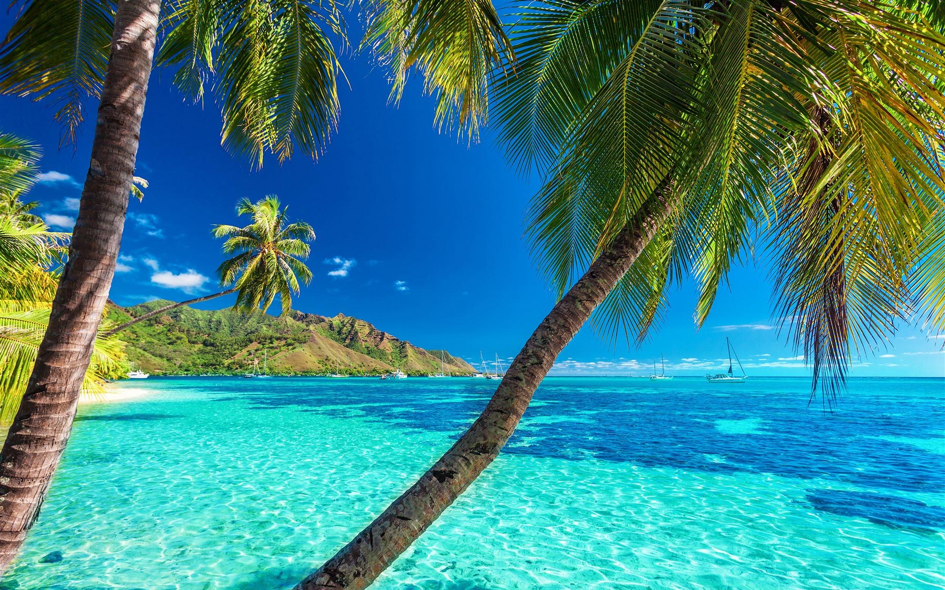 базе картинка на сотку пальмы море голые