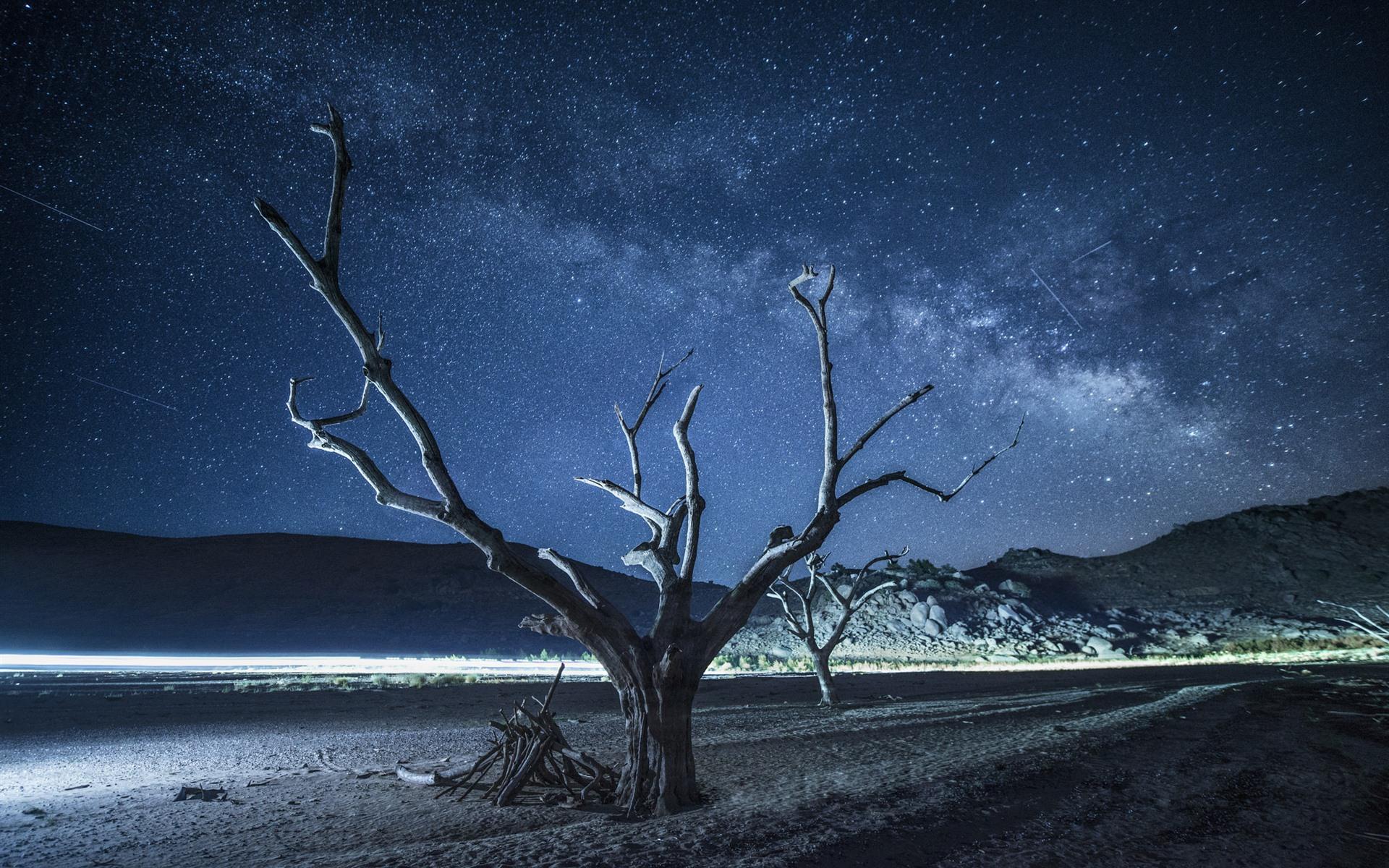 Картинки ночного дерева