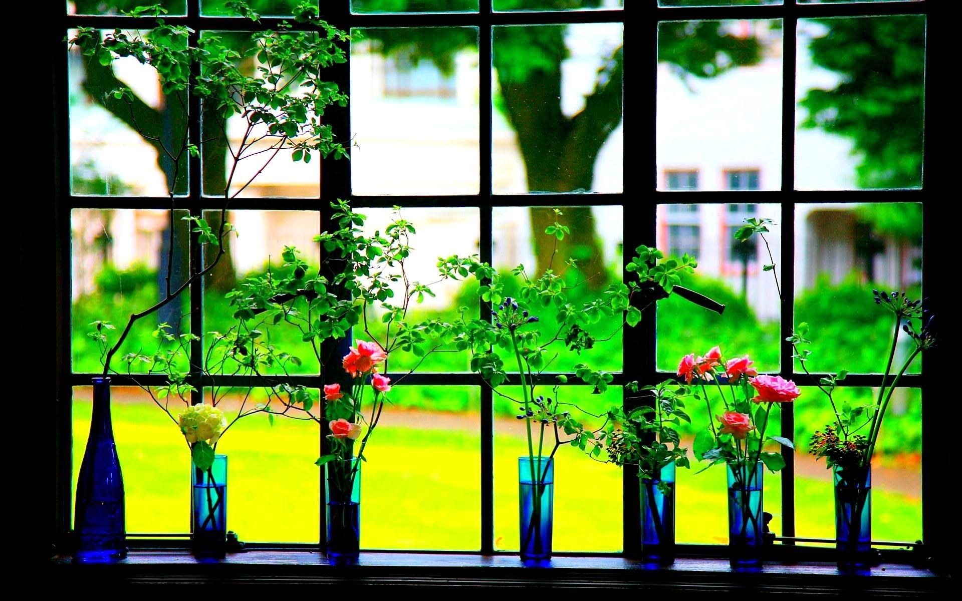 обои на телефон окно в розах хватает денег, удовольствий