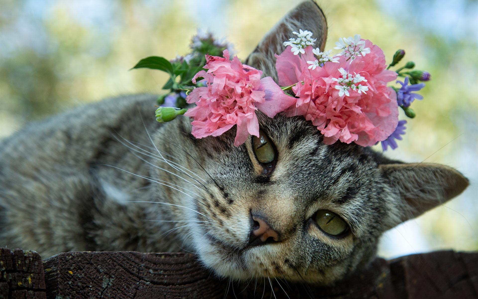 Картинки кот с цветами