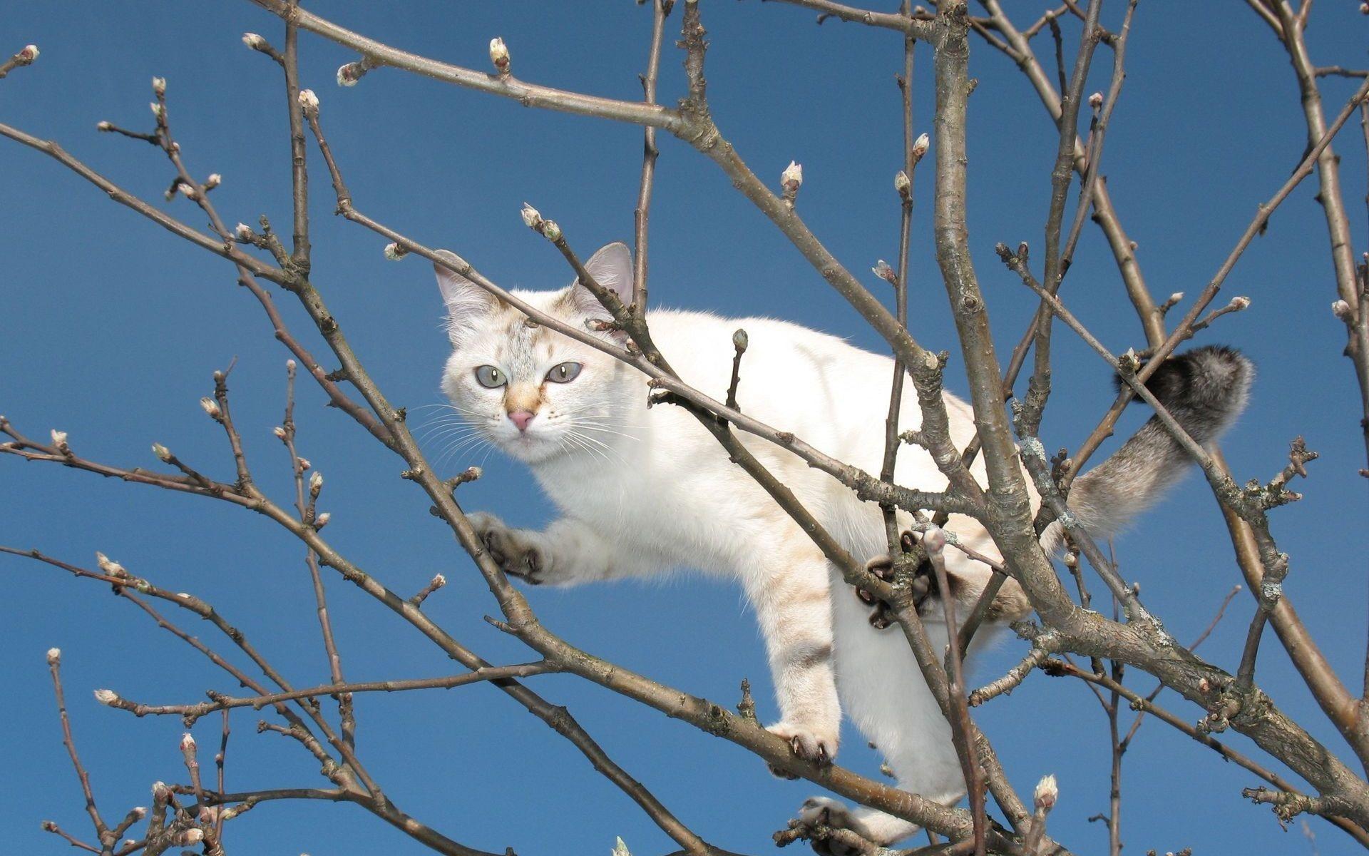 Коты на дереве сонник