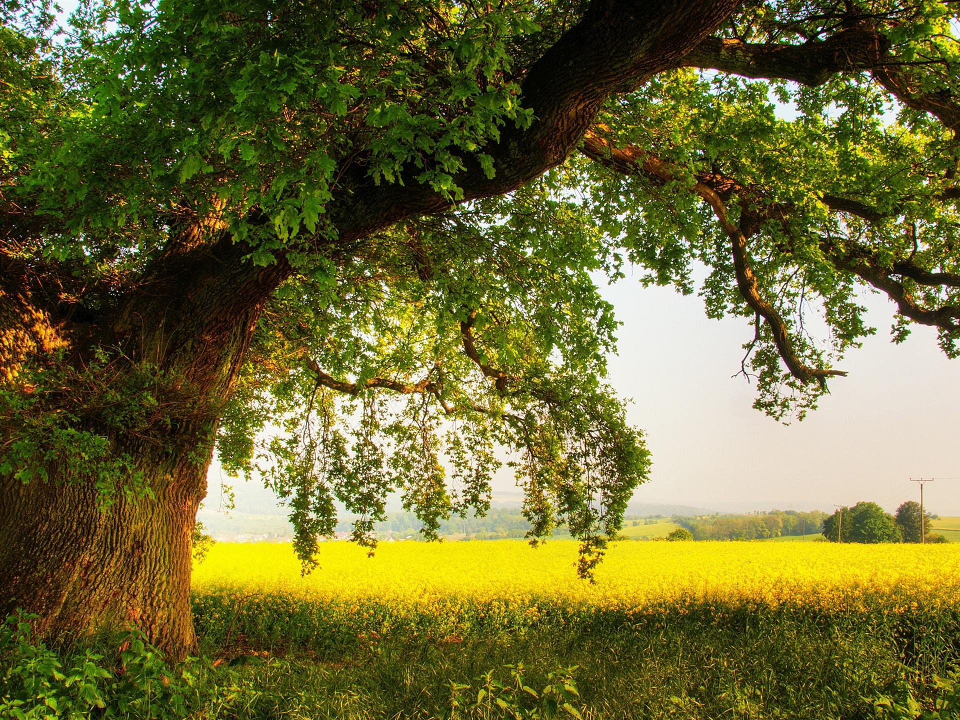 большое дерево  № 1647767 загрузить