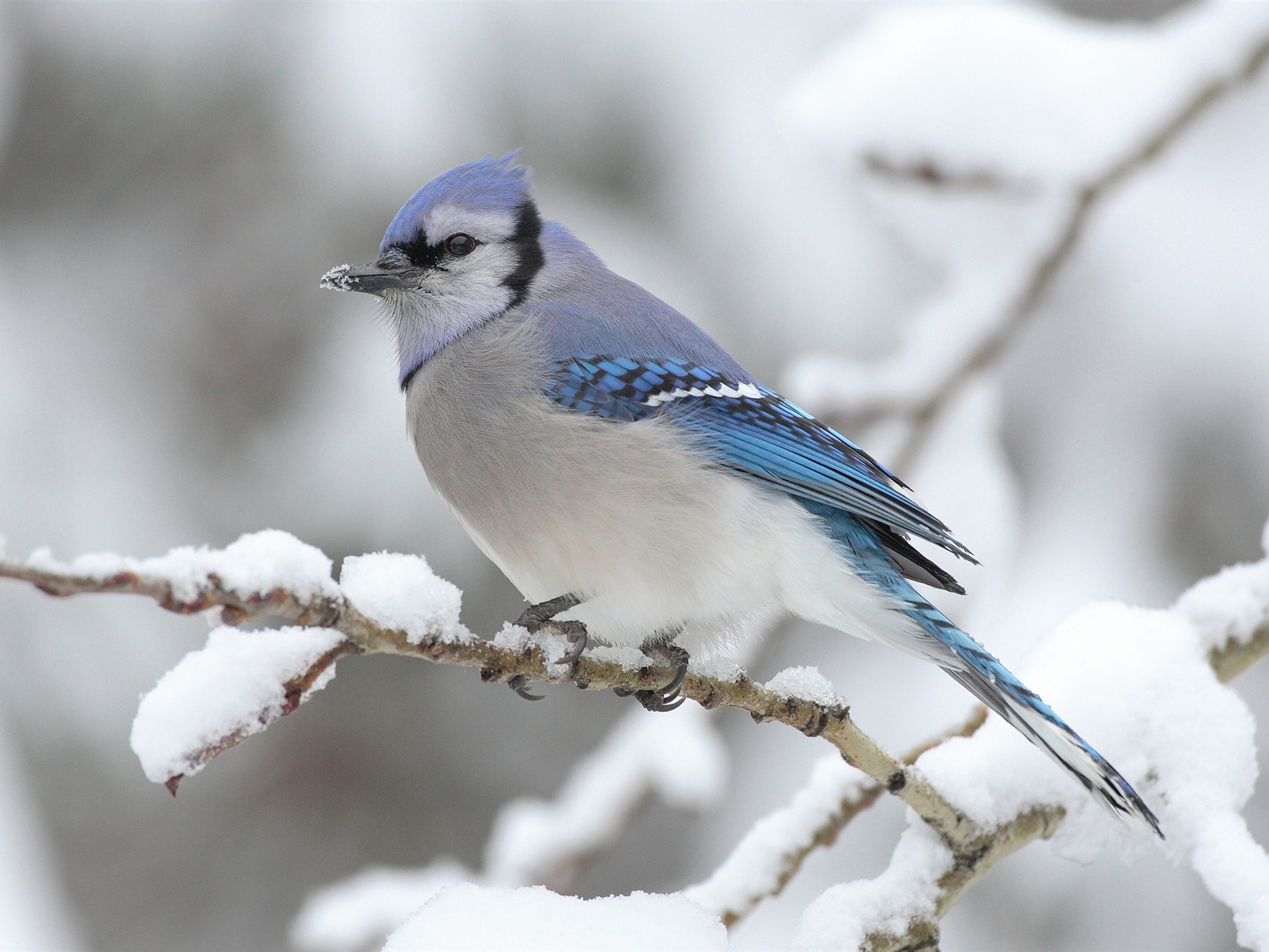 Bird on the tree winter snows wallpaper - 1920x1440