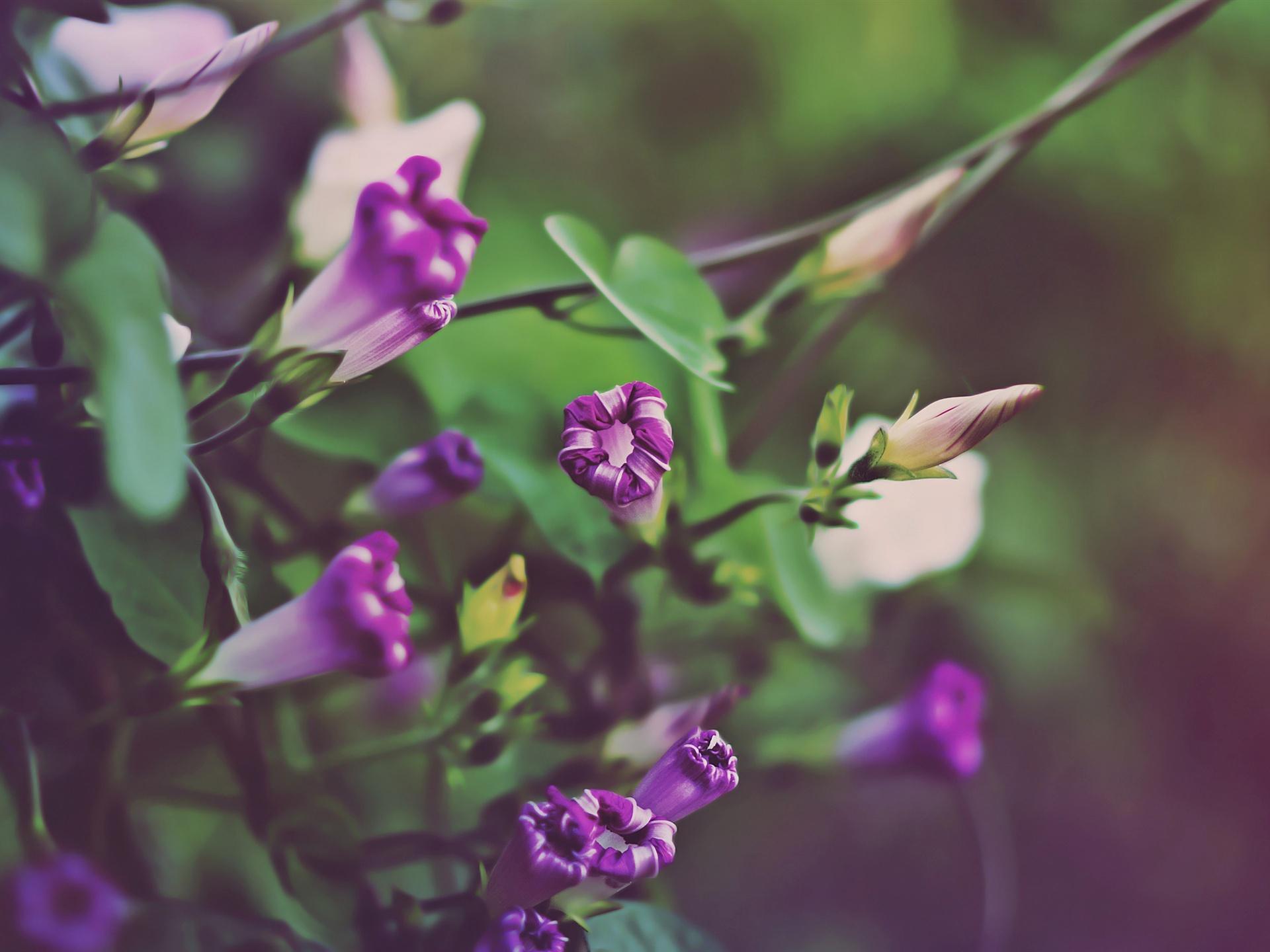 16 Luxury Pubg Wallpaper Iphone 6: 壁紙 朝顔の紫 2560x1600 HD 無料のデスクトップの背景, 画像