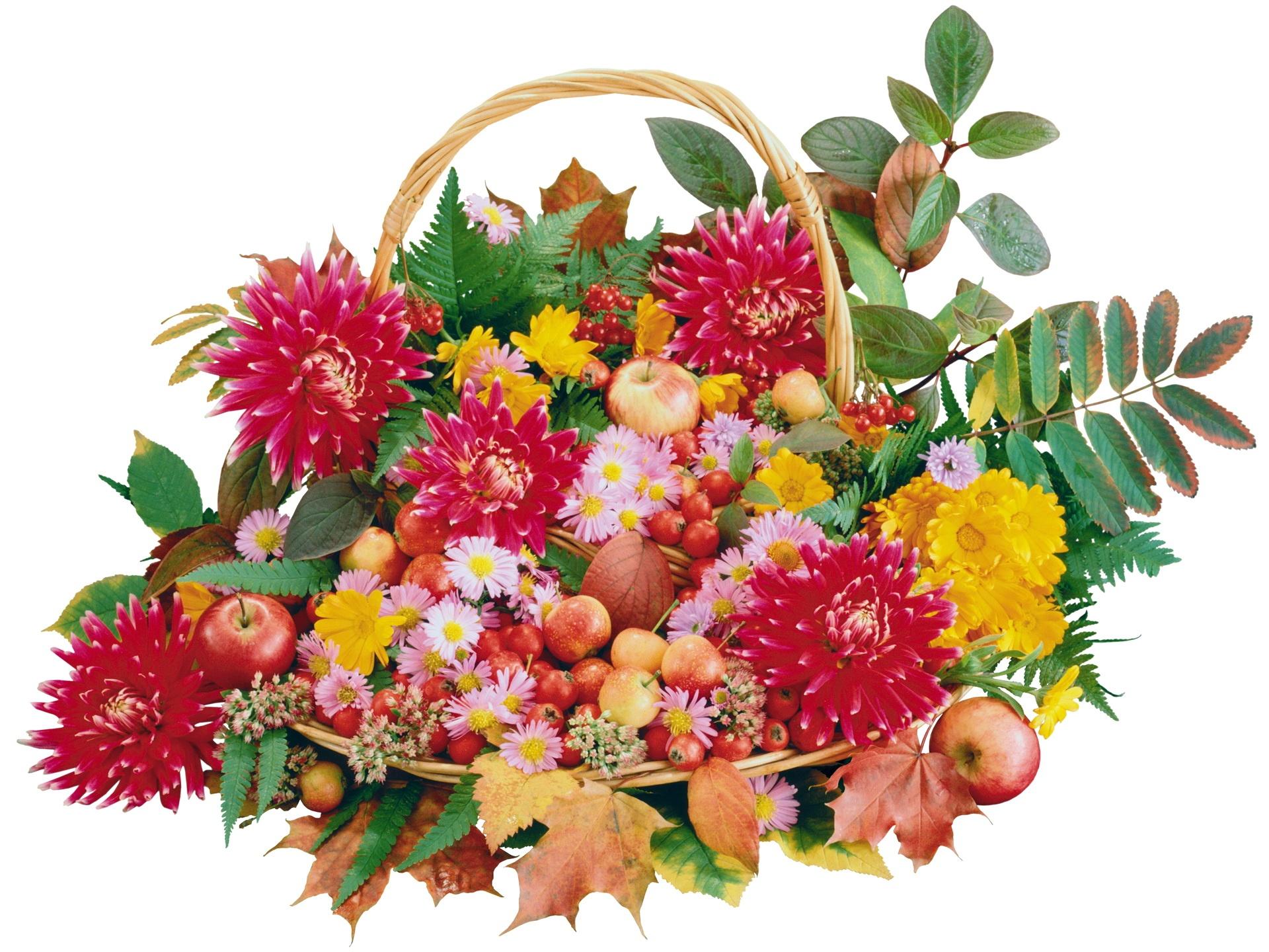 обои на рабочий стол осенние цветы композиции из цветов № 241398  скачать