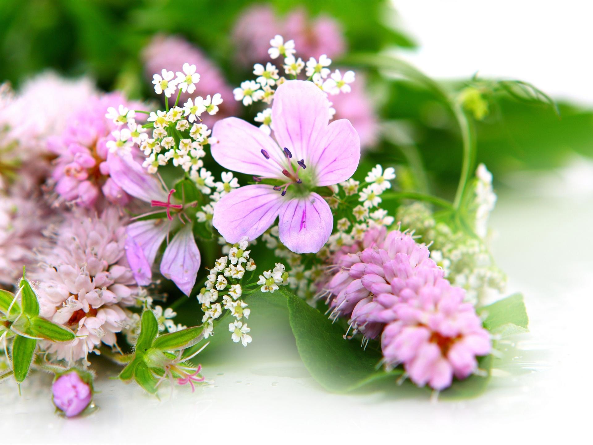 Букет полевых цветов загрузить
