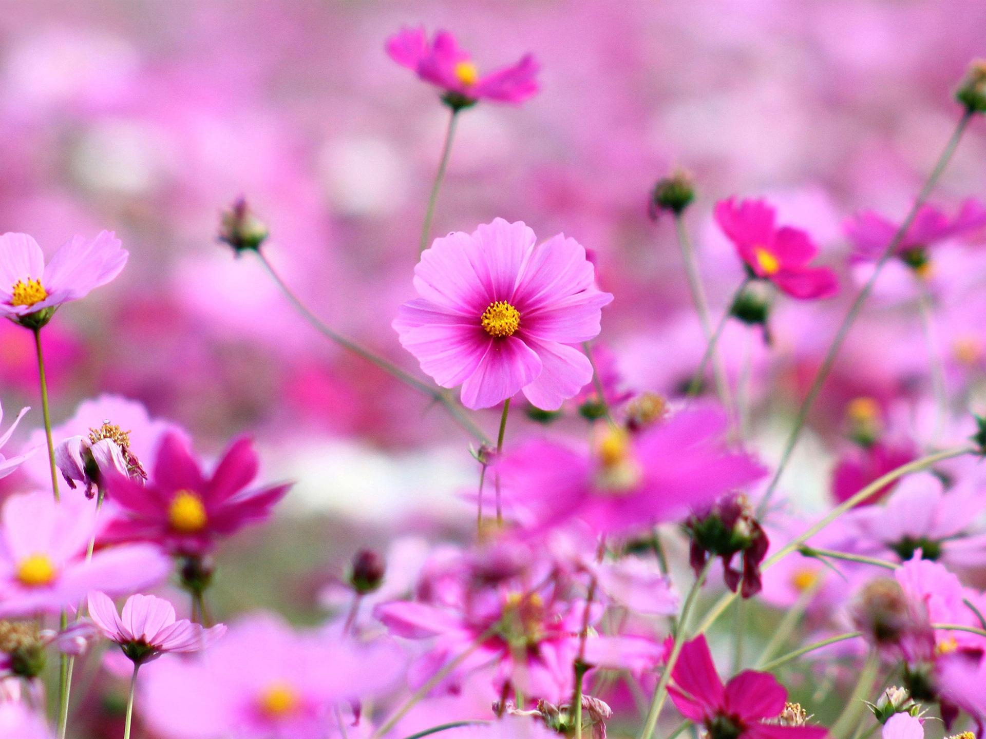 яркие цветочки бесплатно